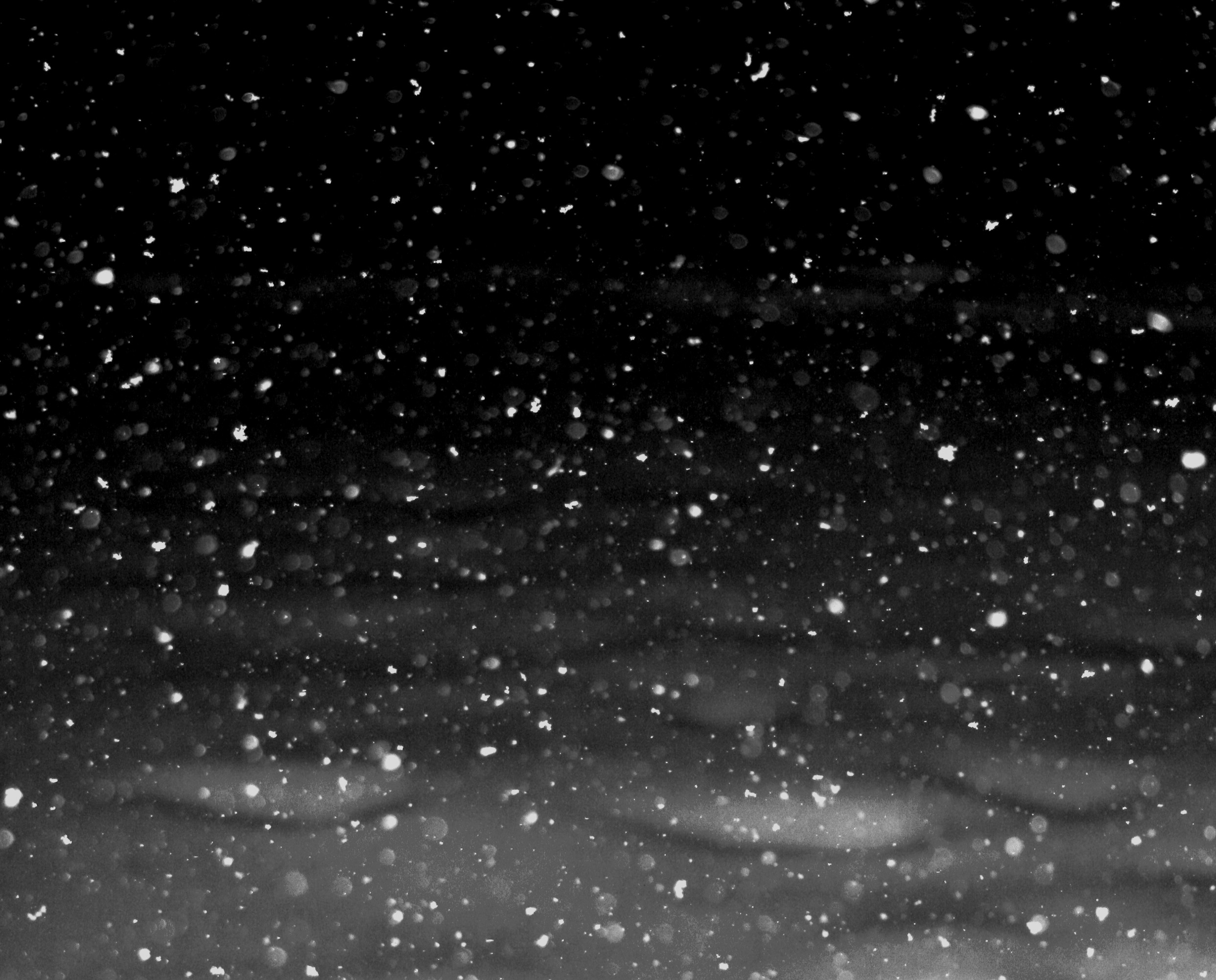 File:Free snowflakes falling at Night texture for layers Creative Commons  (3061623692).