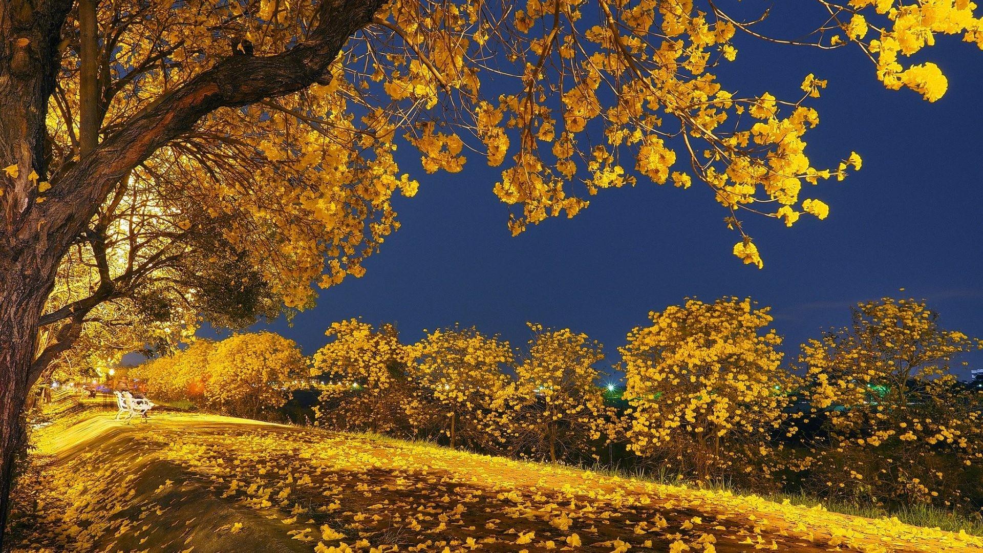 Falling Tag – Falling Nature Night Yellow Trees Sky Tree Autumn Leaves  Tonight Park Landscape Fall
