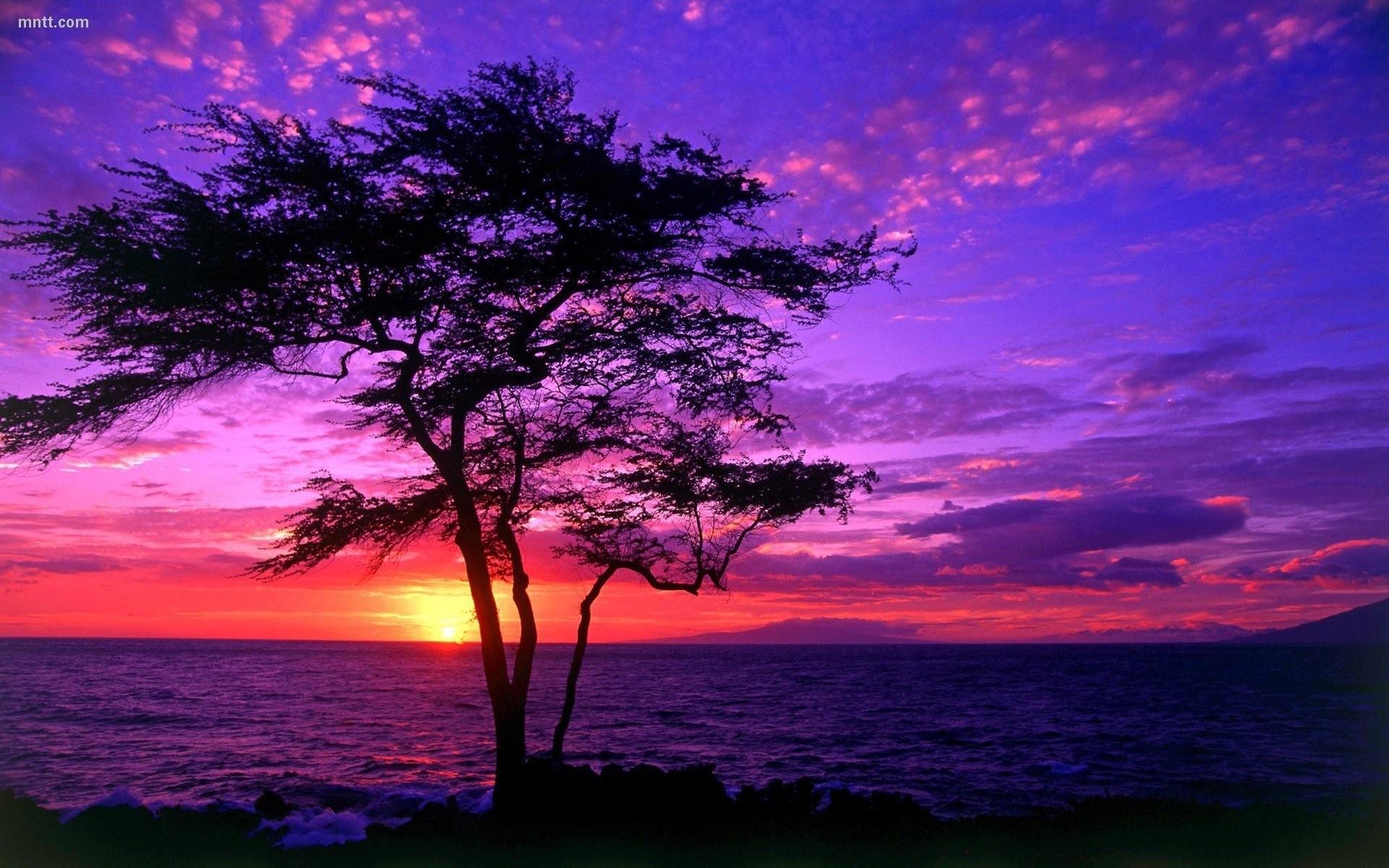 Free Beautiful Sunset Wallpapers Naldz Graphics 1920×1200 Pretty Sunset  Backgrounds (17 Wallpapers)