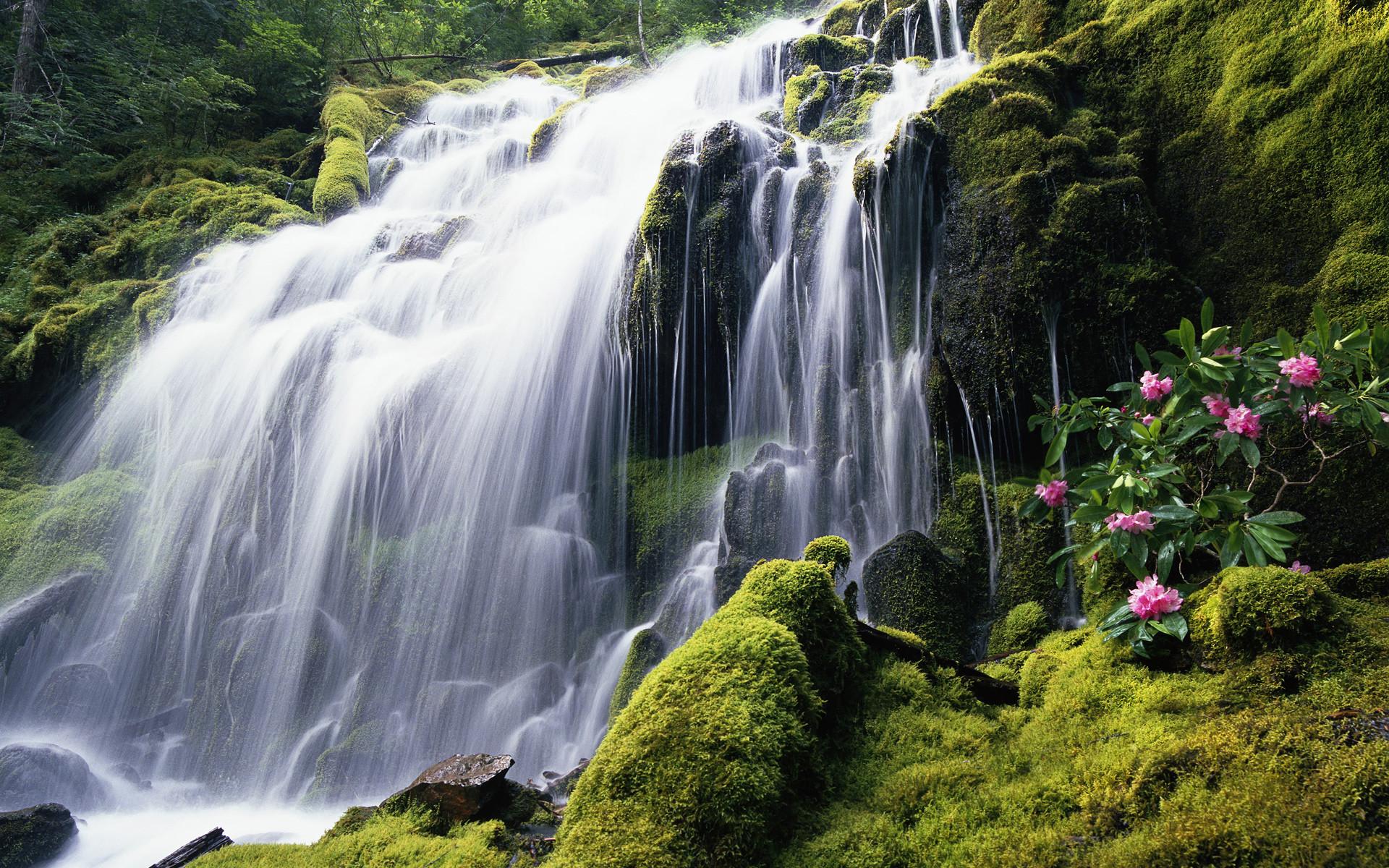 Forest Waterfall HD Wallpaper Forest Waterfall HD Wallpaper |  ImageBank.