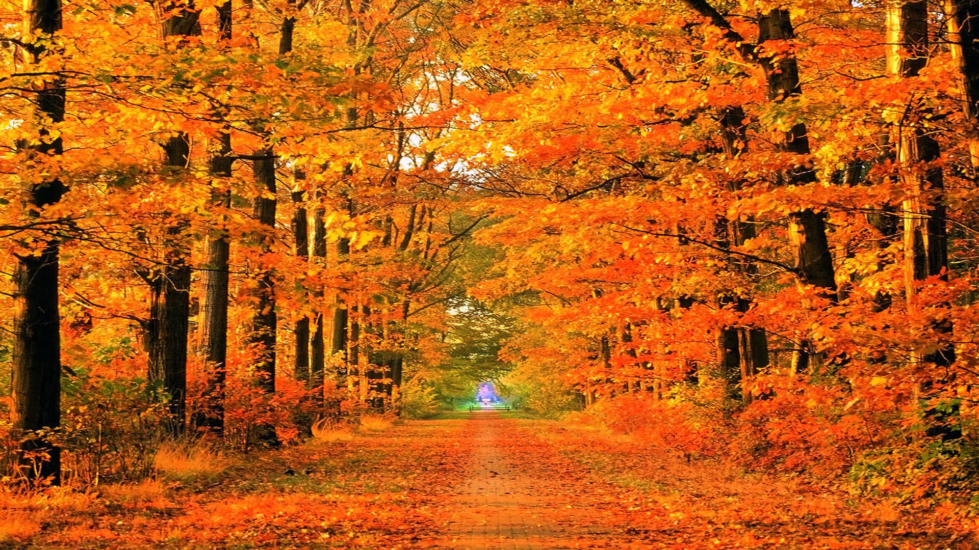 Autumn Roads Wallpaper Autumn, Roads, Parks
