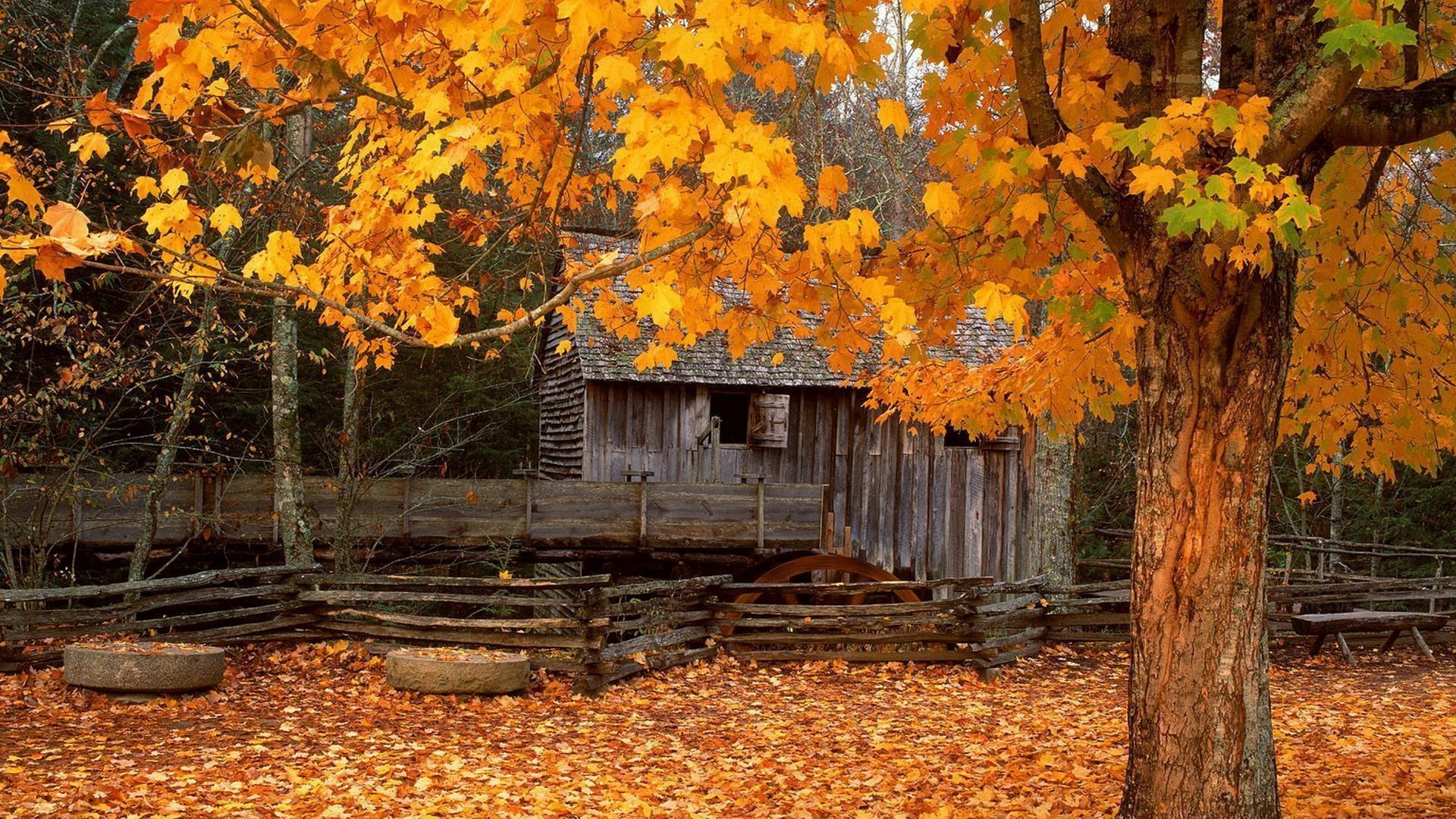 Images Of Fall Computer