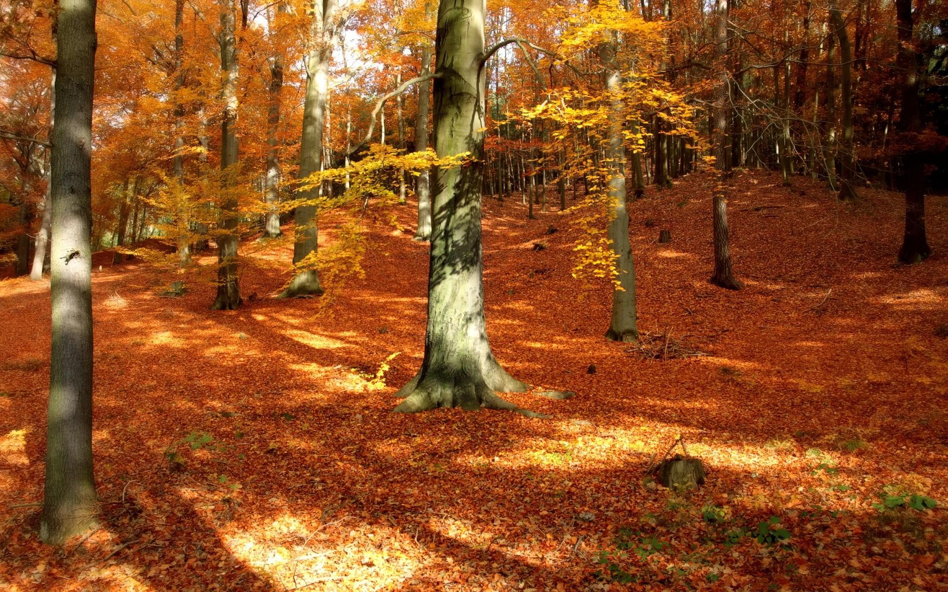 Autumn Forest Desktop Background.