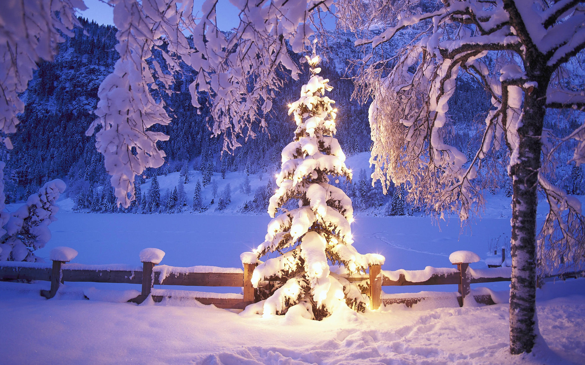 Forest Christmas Wallpapers, Forest Christmas Myspace Backgrounds .