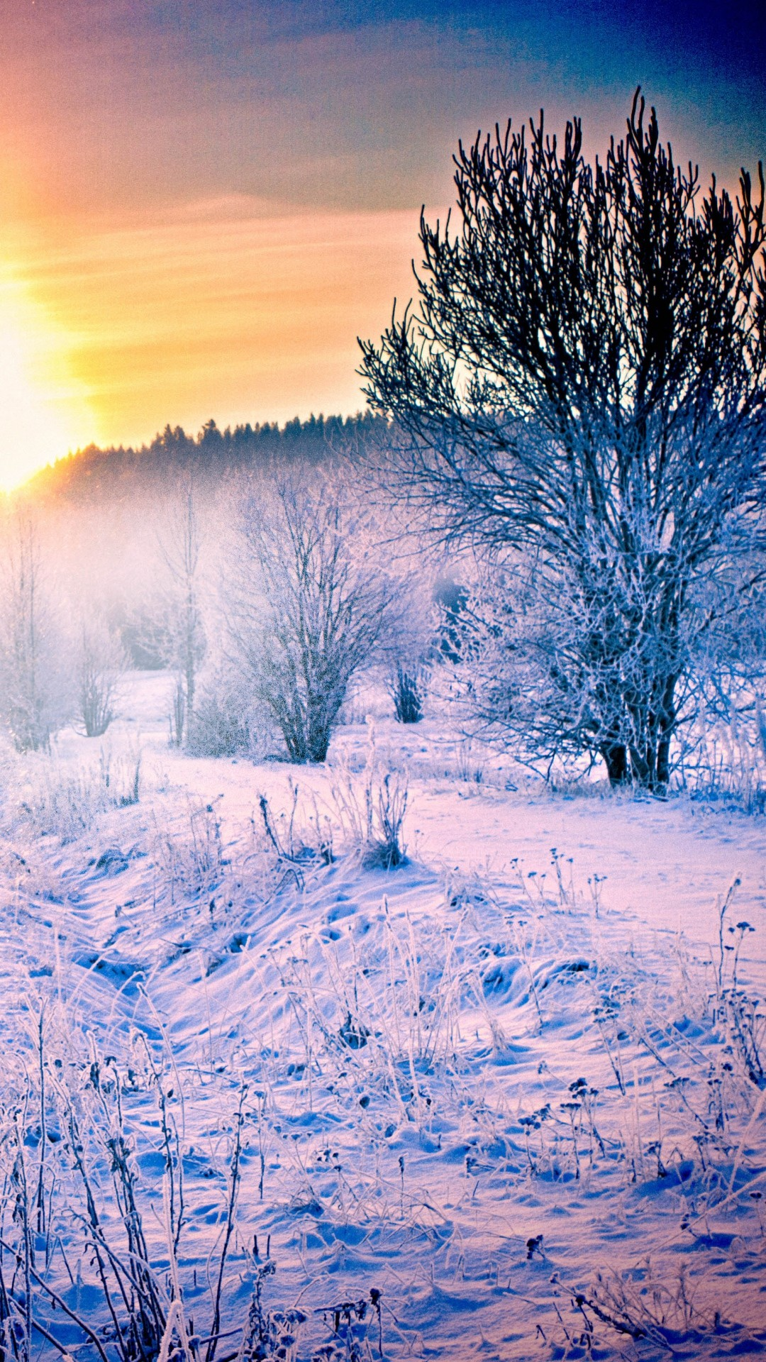 Winter Snow Forest Trail #iPhone #wallpaper