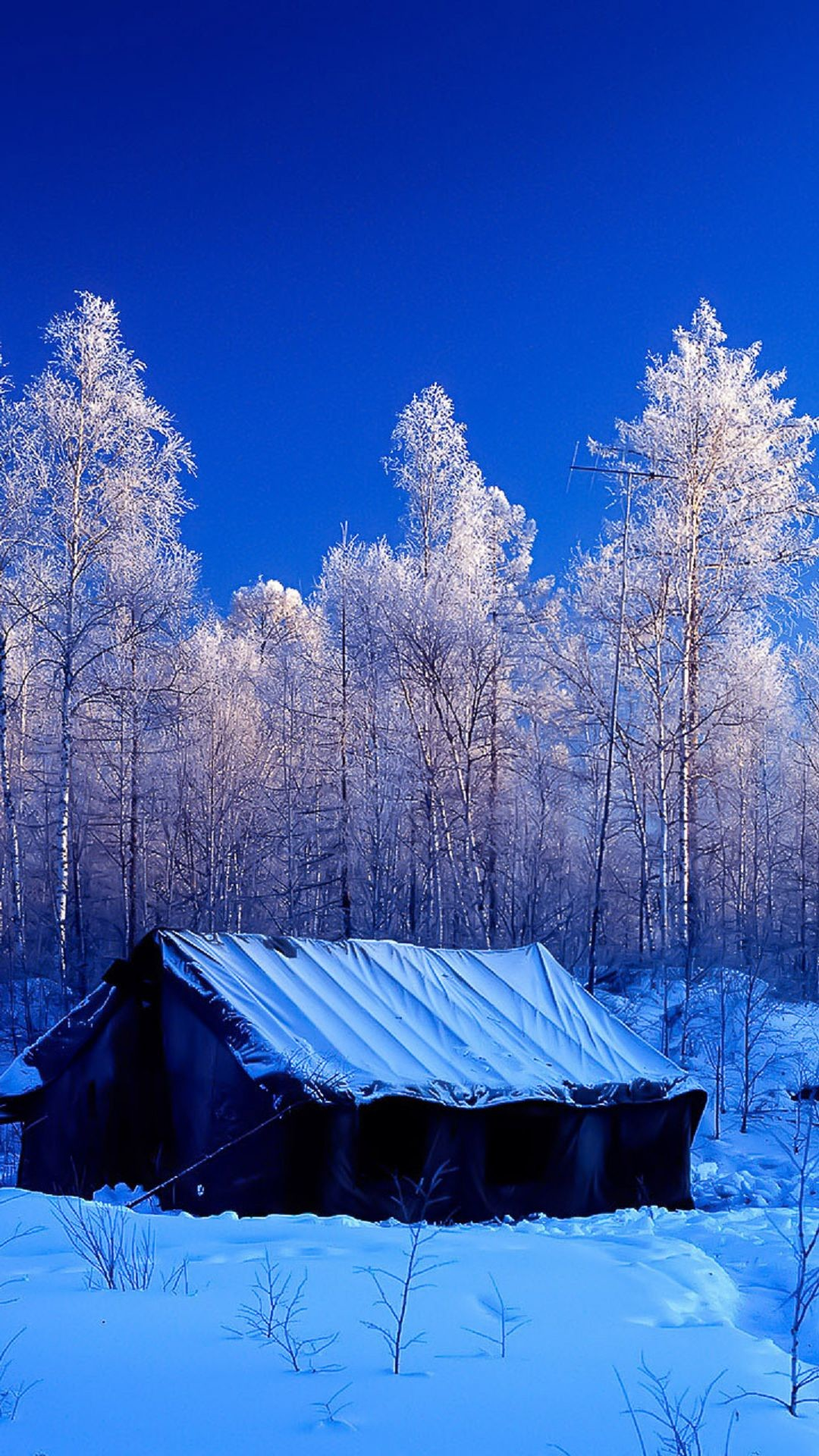 Snow Forest Tent Winter Nature Android Wallpaper