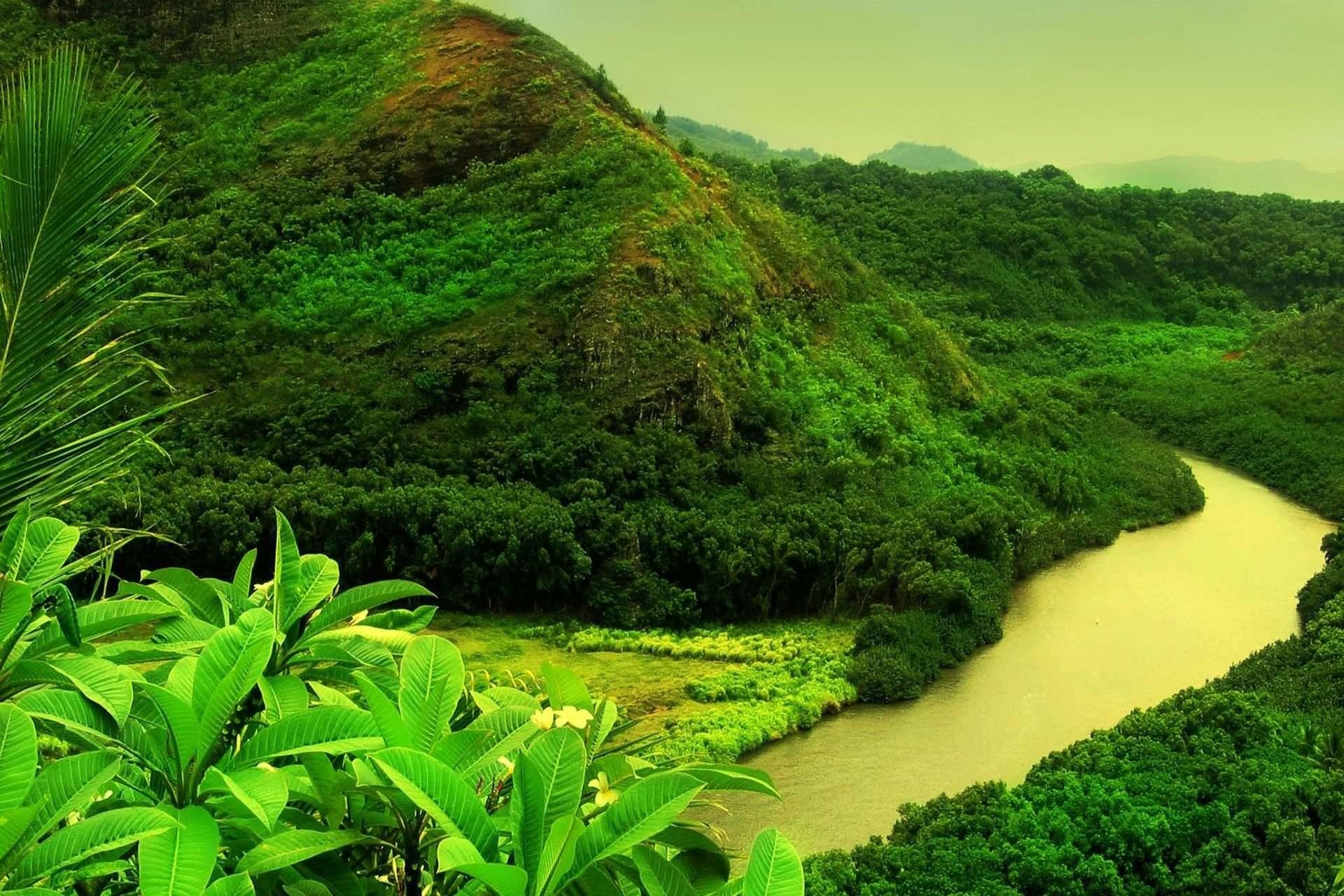 Beautiful Greenery of Real Nature Scene Wallpaper Free Download