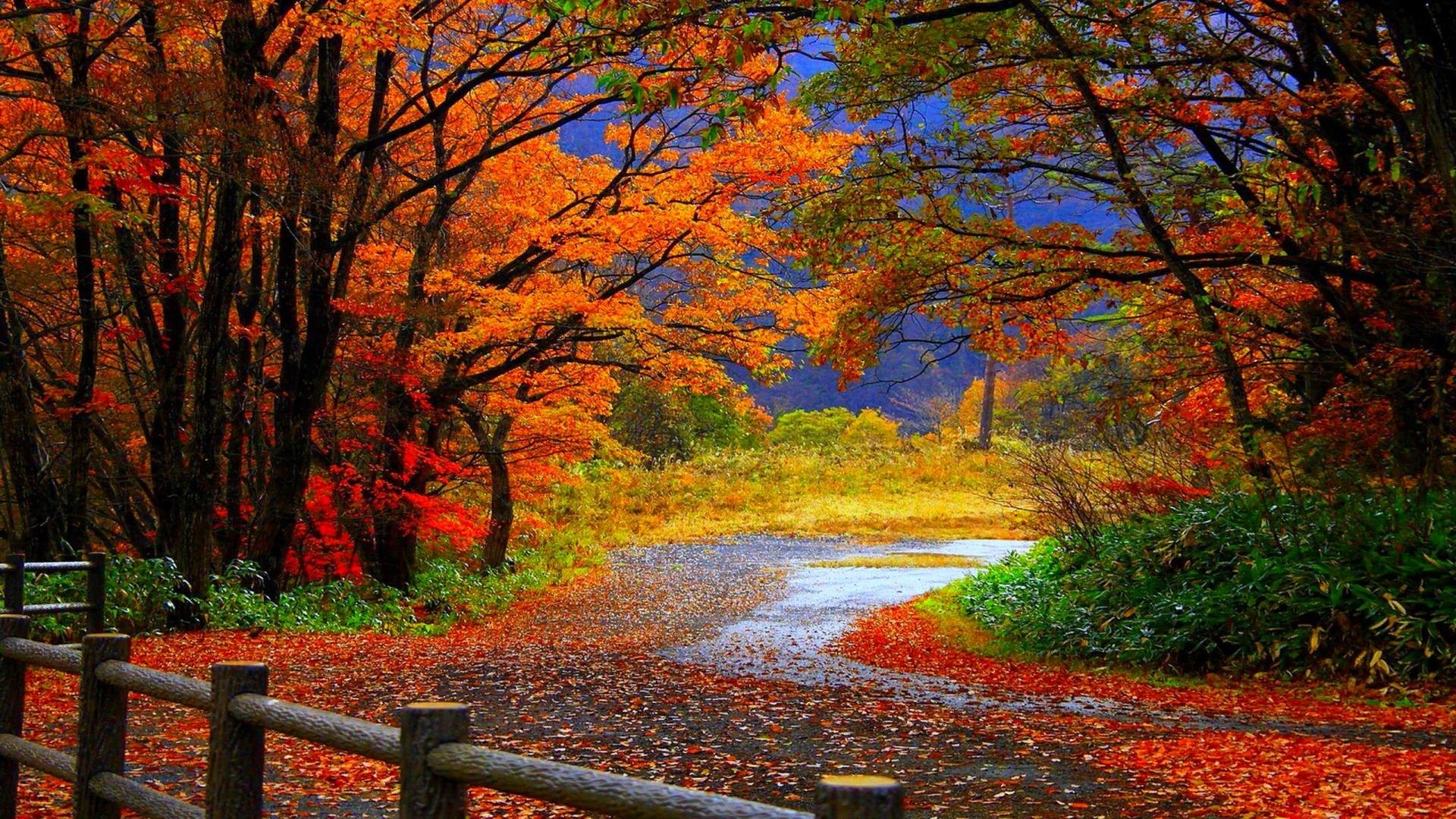 Showing posts & media for Fall leaves scenes wallpaper   www .