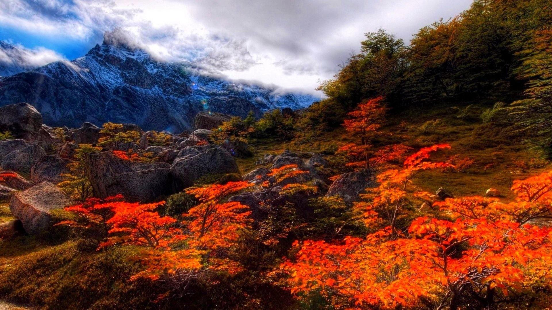 Leaves – Fall Forest Landscape Leaf Autumn Nature Season Leaves Tree  Seasons Color Desktop Wallpaper Scenes