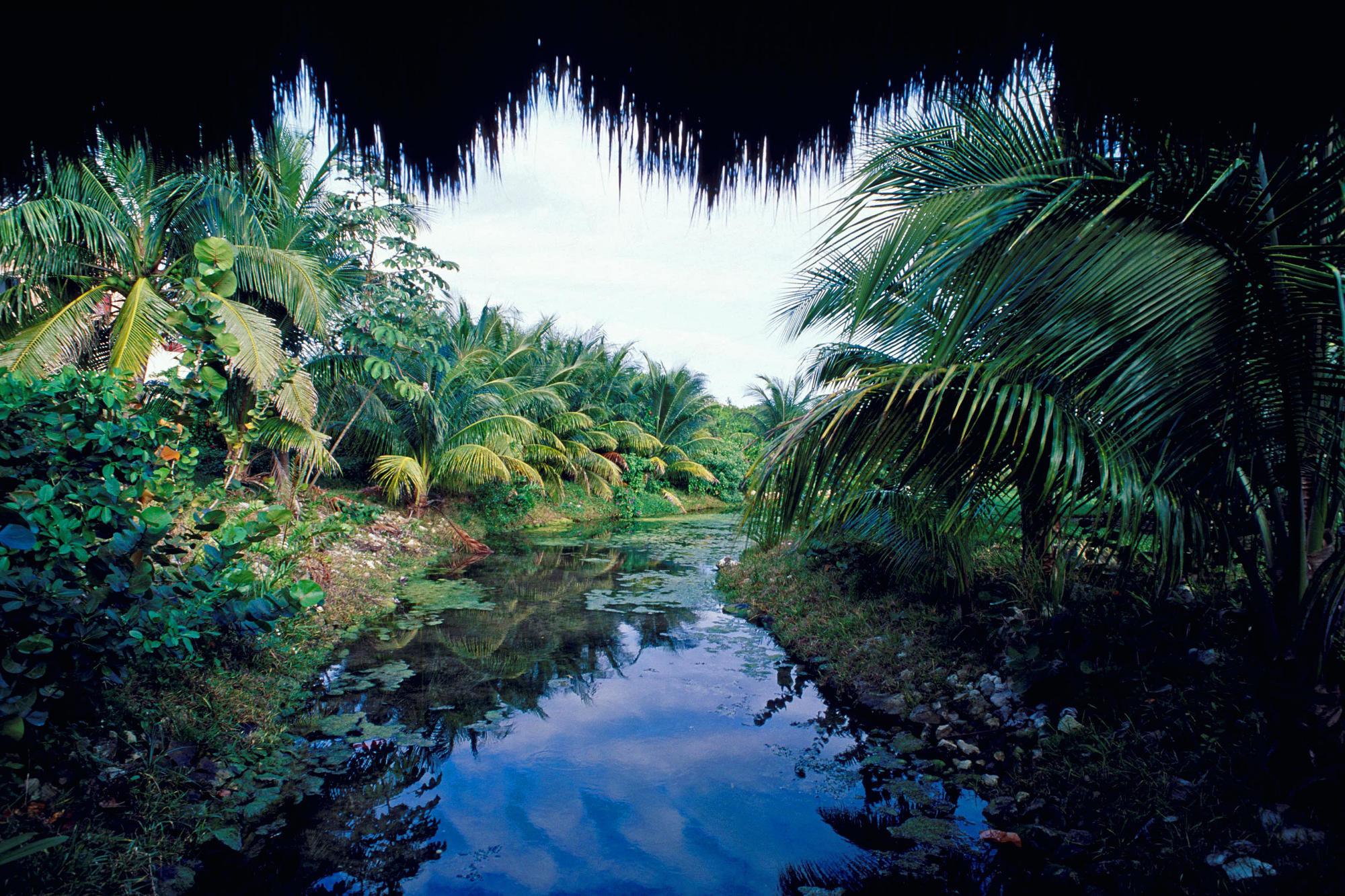 Nature scene in Mexico, Yucatan wallpapers