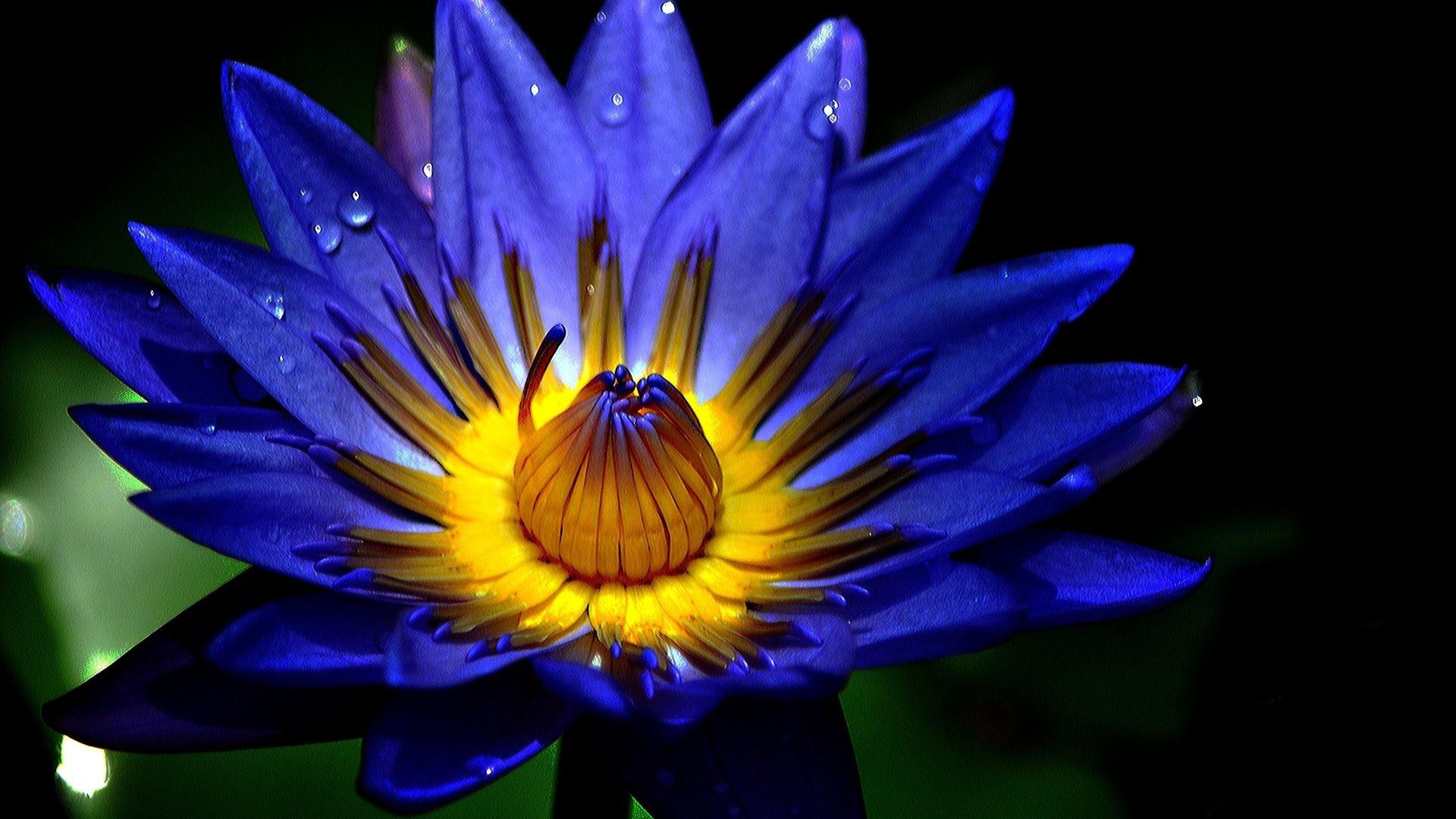 Flowers – Water Drop Rain Flower Drops Macro Background Wallpaper Nature 3d  for HD 16: