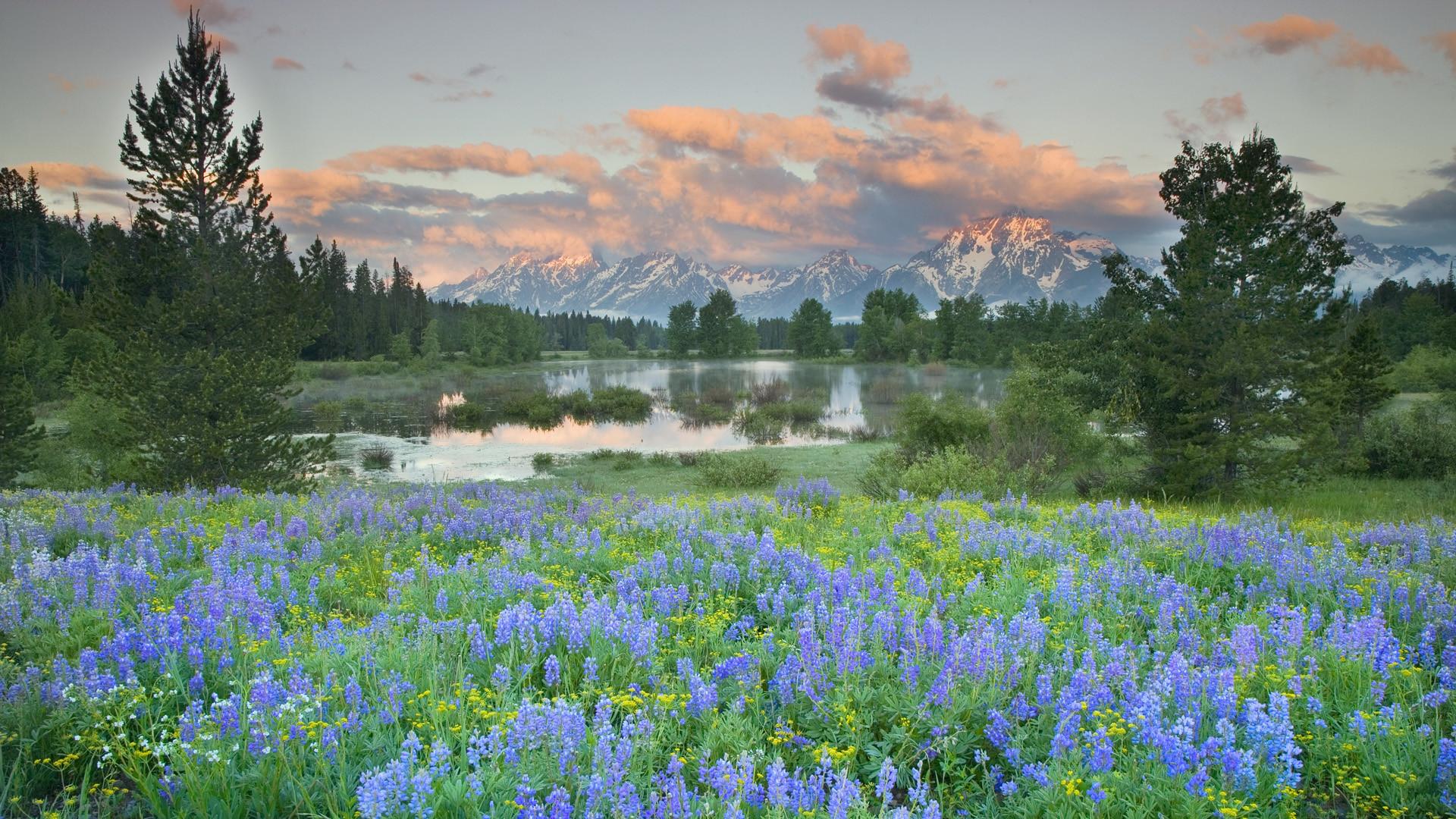Flower Natural Scene Photos