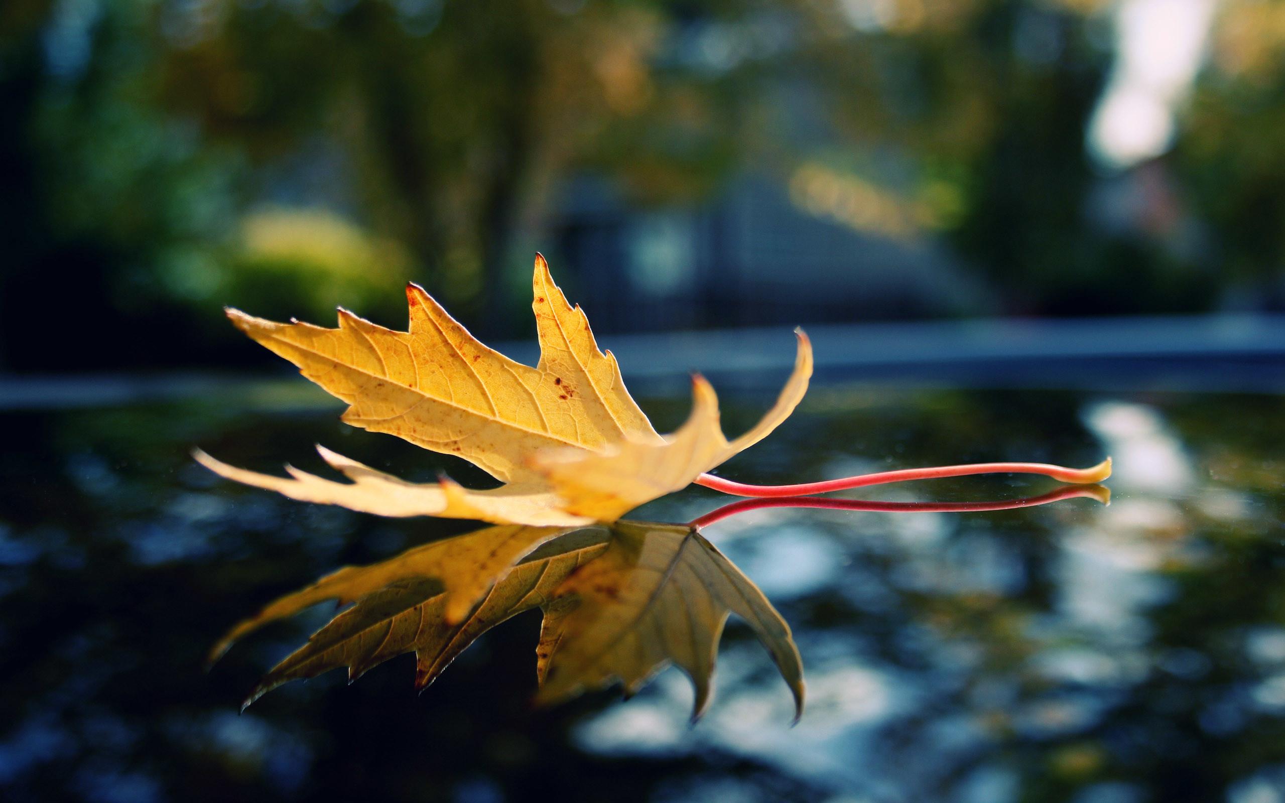 Autumn Scene In the Forest Apple Mac Desktop Wallpapers HD Fall Mac  Background