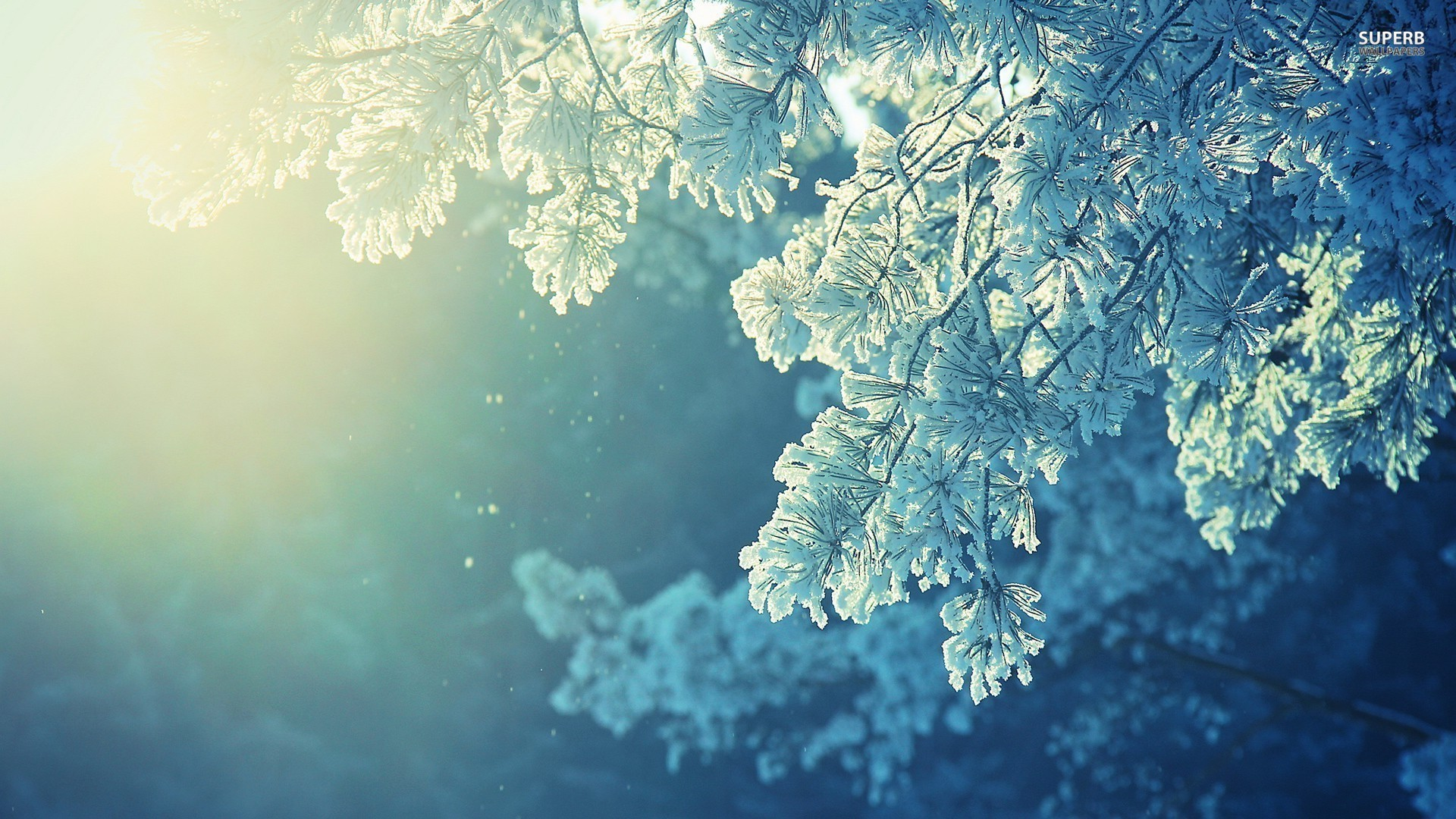 Frosty Wallpapers