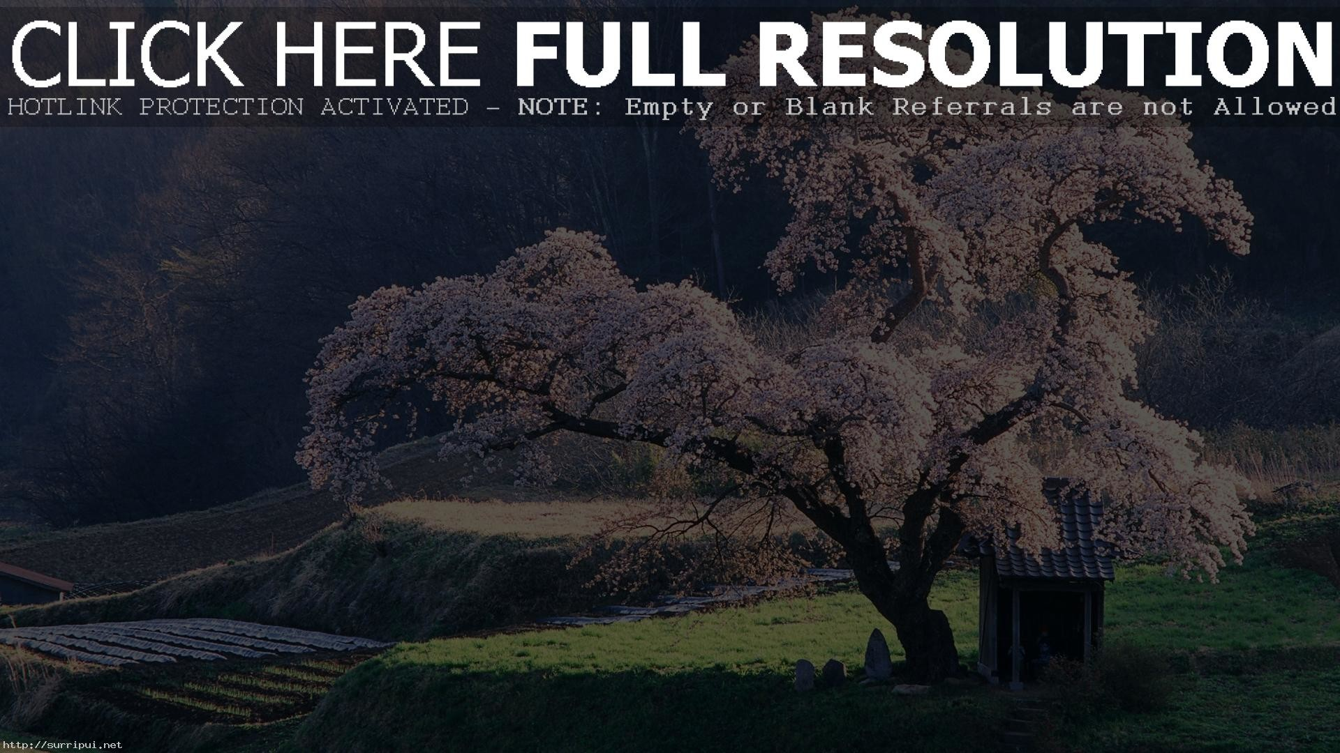 Japan Mountain Japanese Landscape The Cherry Blossom Hd