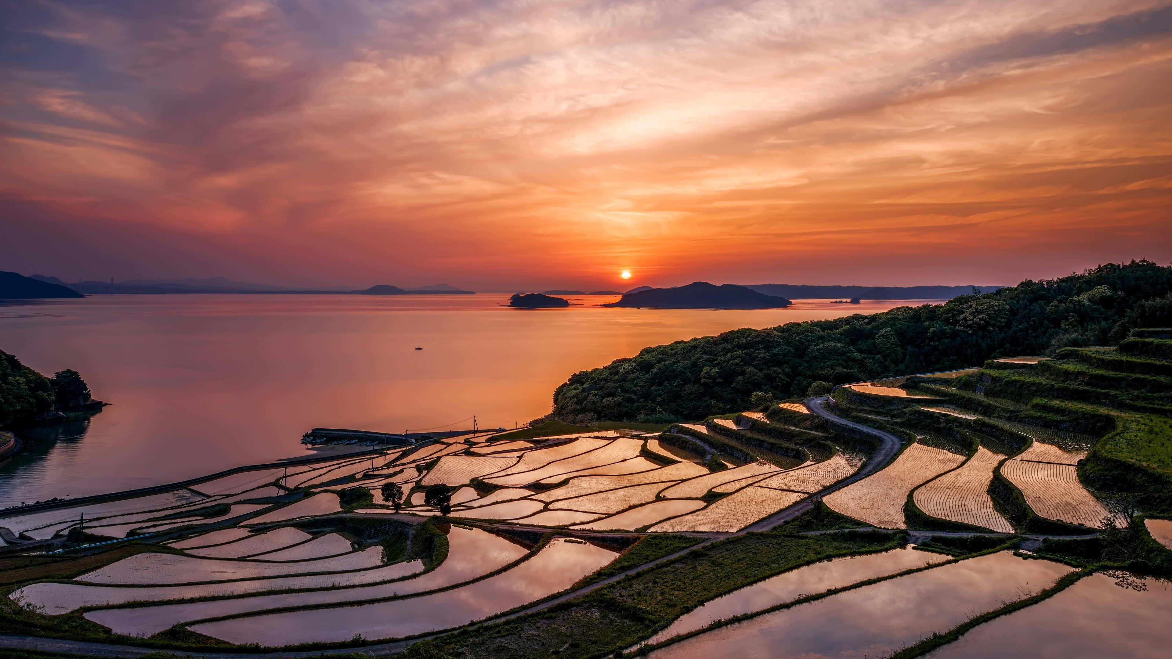 Japan's Rise Fields at Sunset 4K Wallpaper