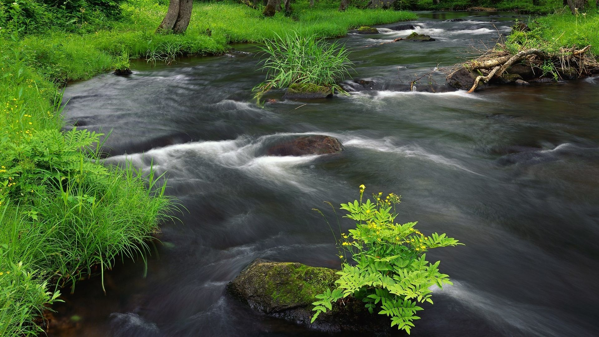 FOREST STREAM JAPAN Landscape Japanese Digital Scenery Photography HDR  Wallpaper – 1920×1440