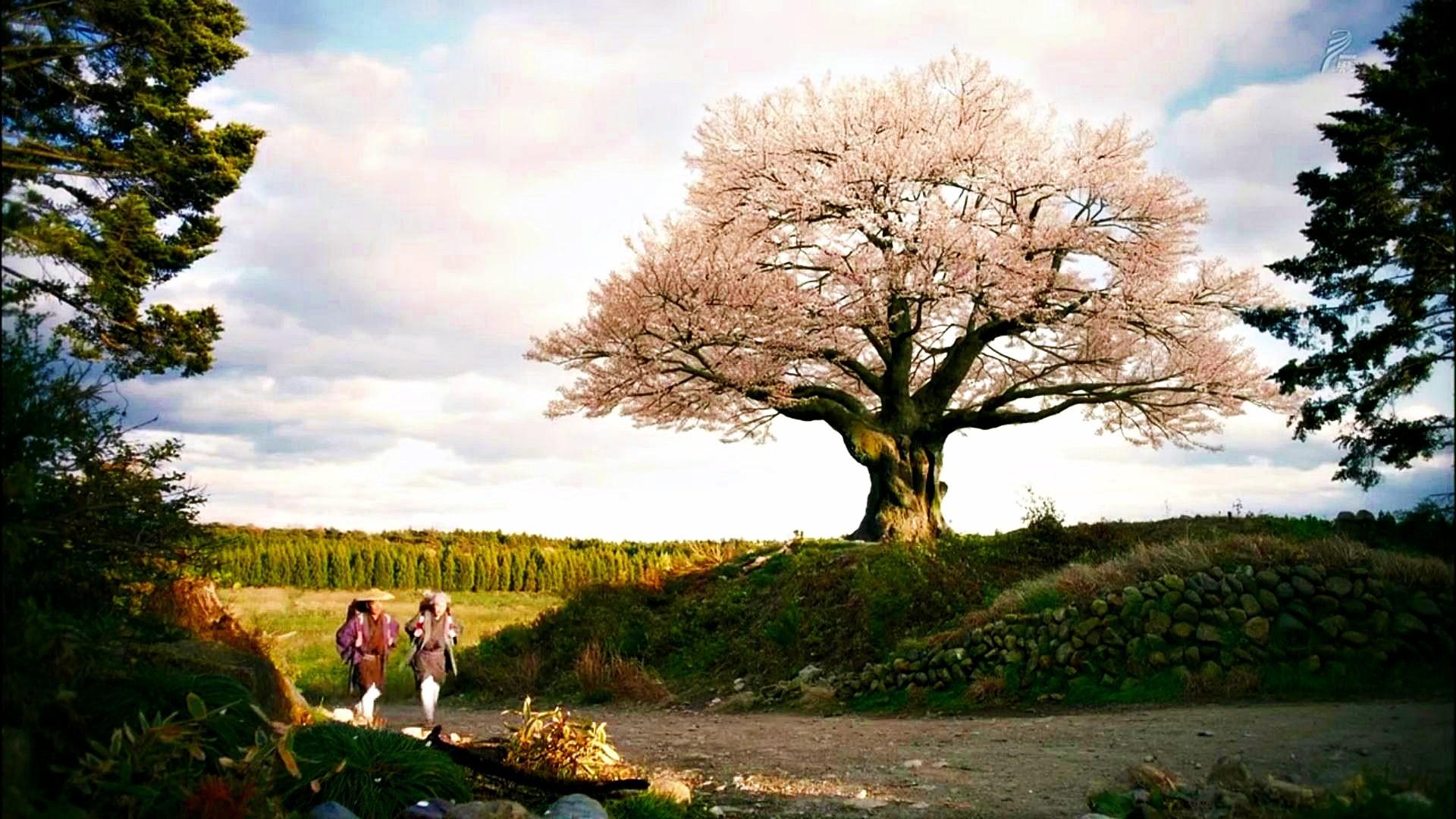 Japanese Spring Landscape