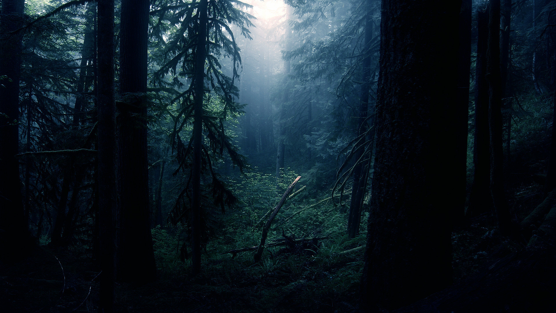 Pacific NW forest [1002×564] …