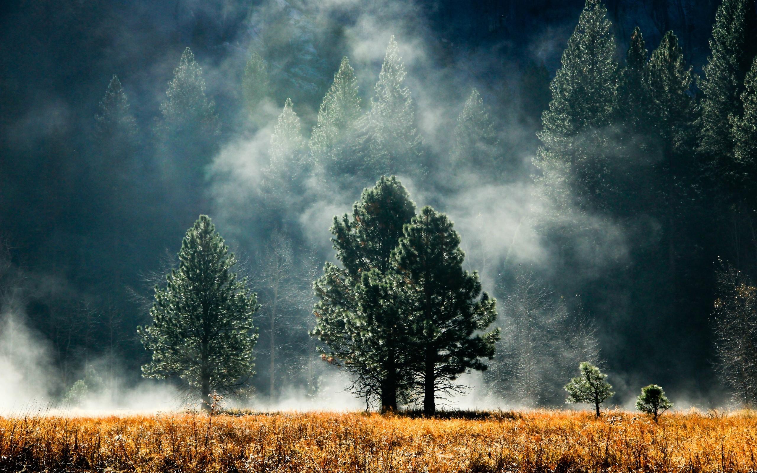 fog hd wallpaper. Â«Â«
