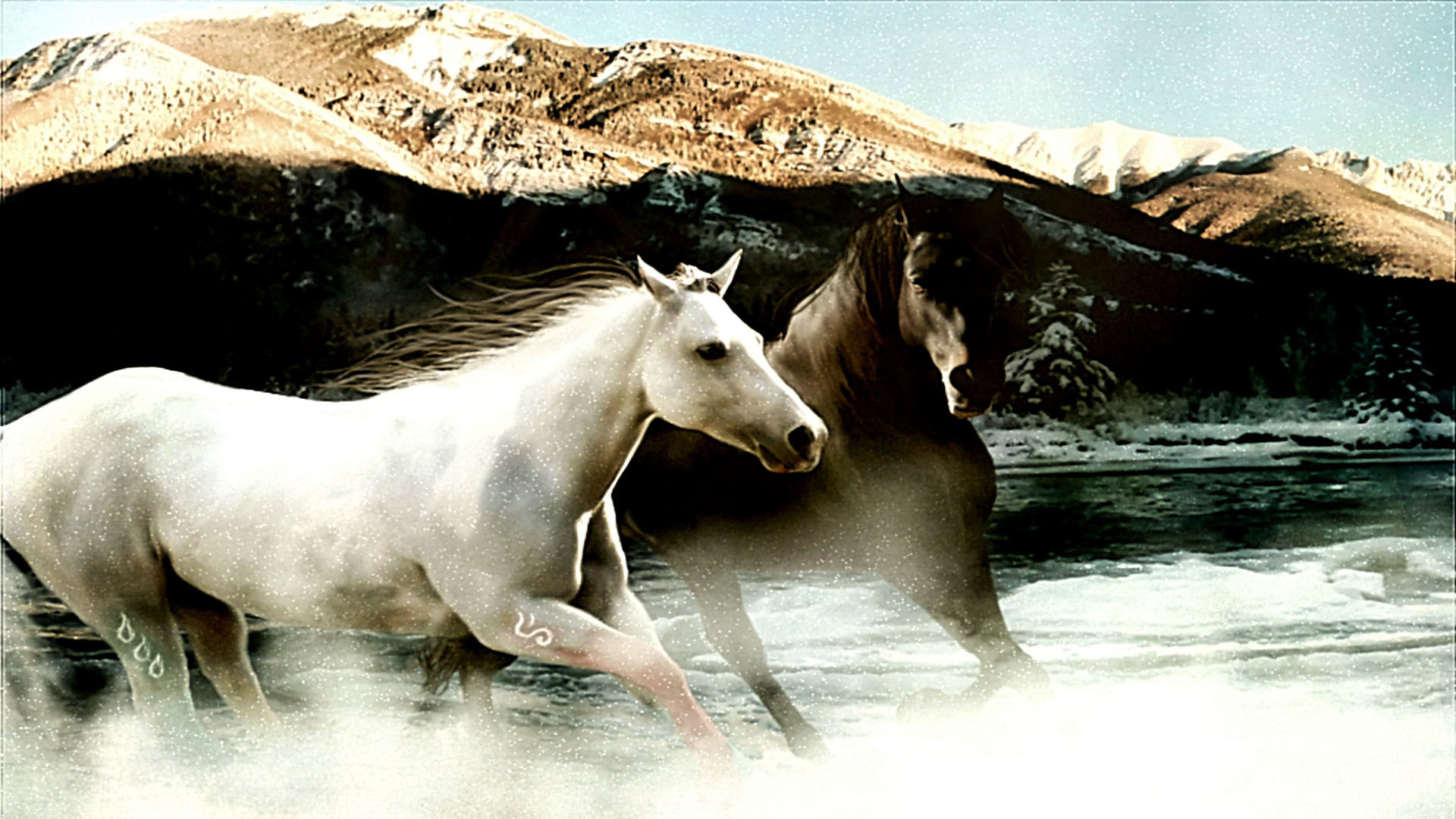 Appaloosa Horse Wallpapers Pacific Northwest