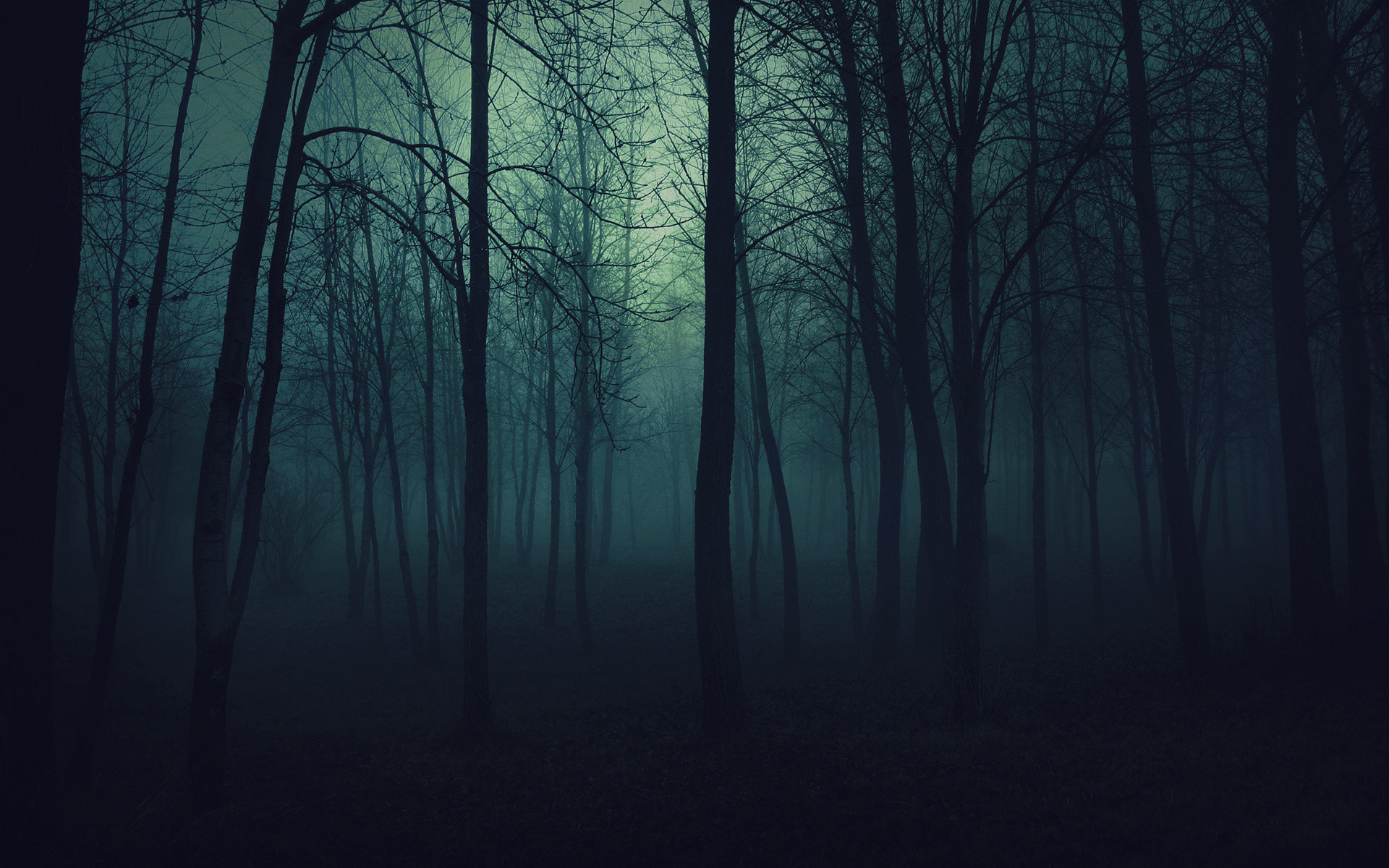 100% Quality HD Top Spooky Forest Wallpapers HD Wallpapers