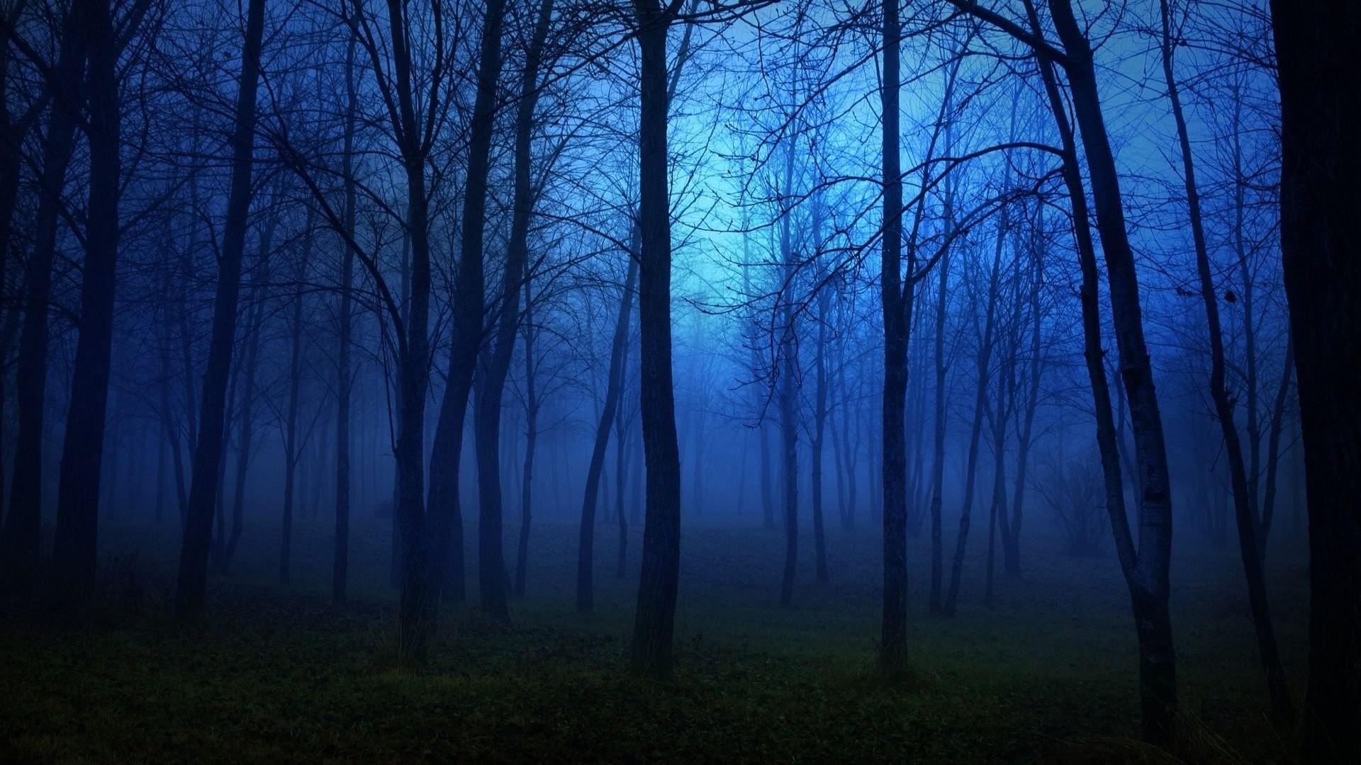 Forest nature tree landscape night fog mist dark spooky wallpaper .