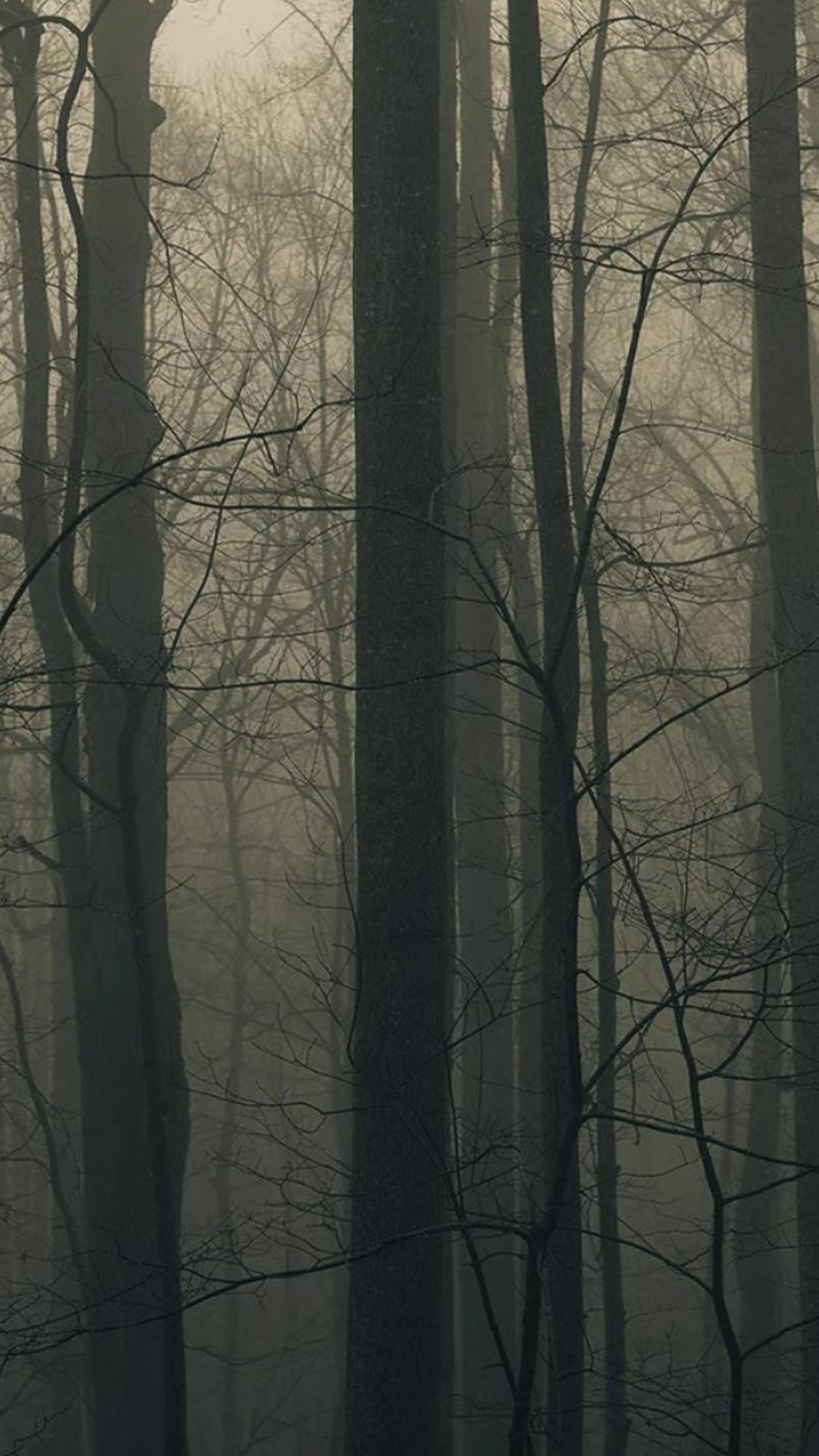 Spooky Forest Trees Mist Android Wallpaper …