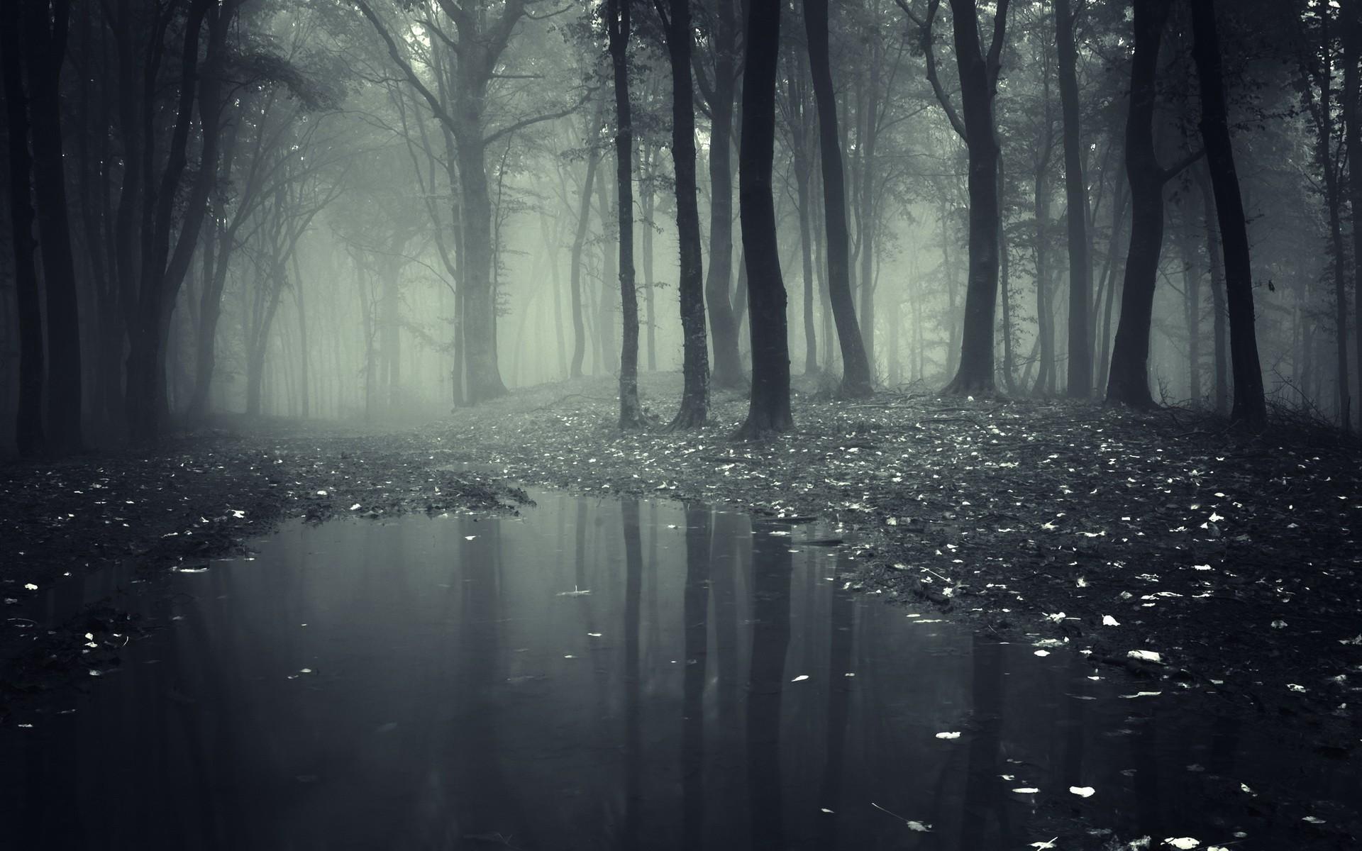 Dark Creepy Forest Wallpaper