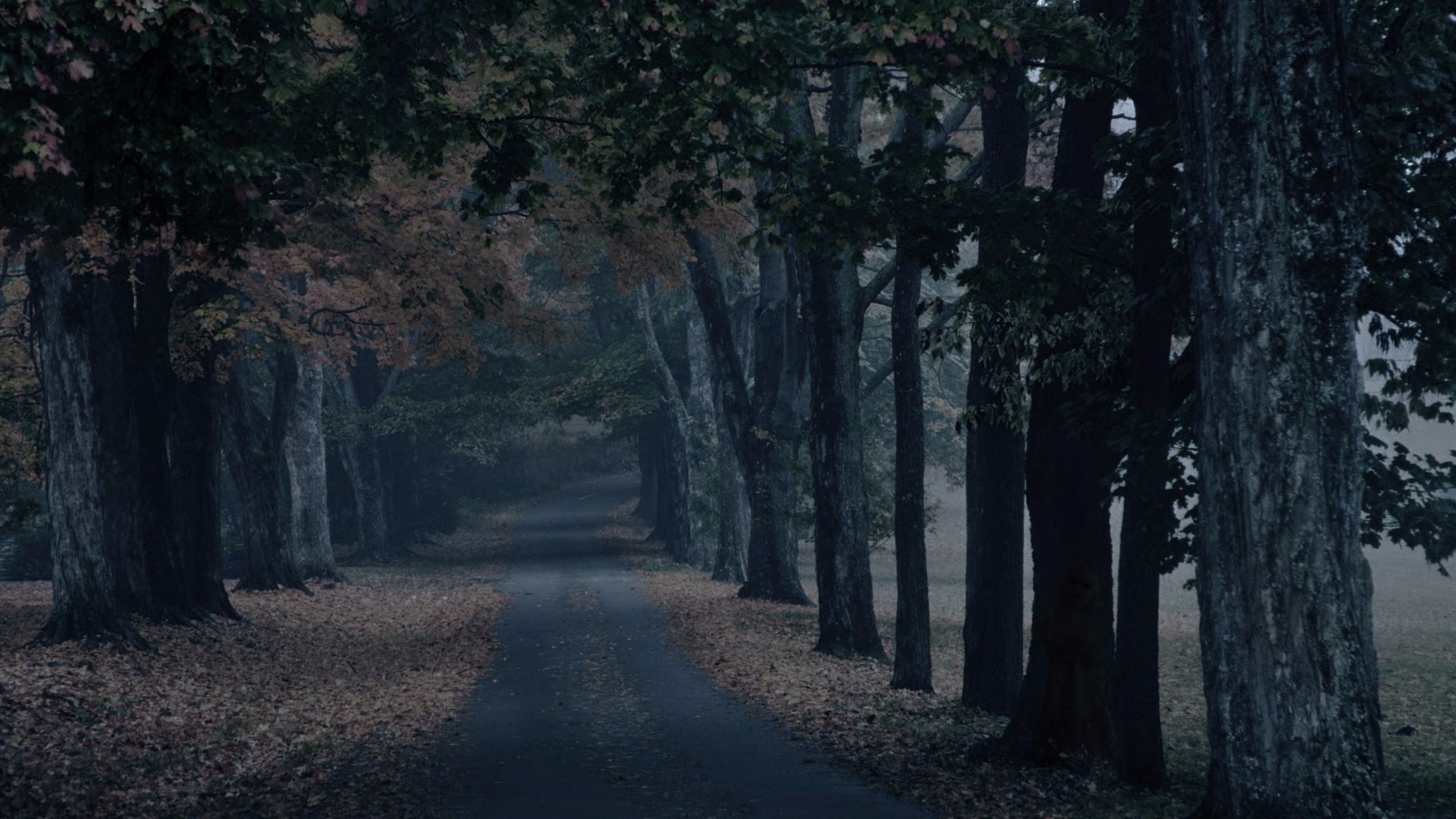 Free Scary 4K Forest Wallpapers | Free 4K Wallpaper