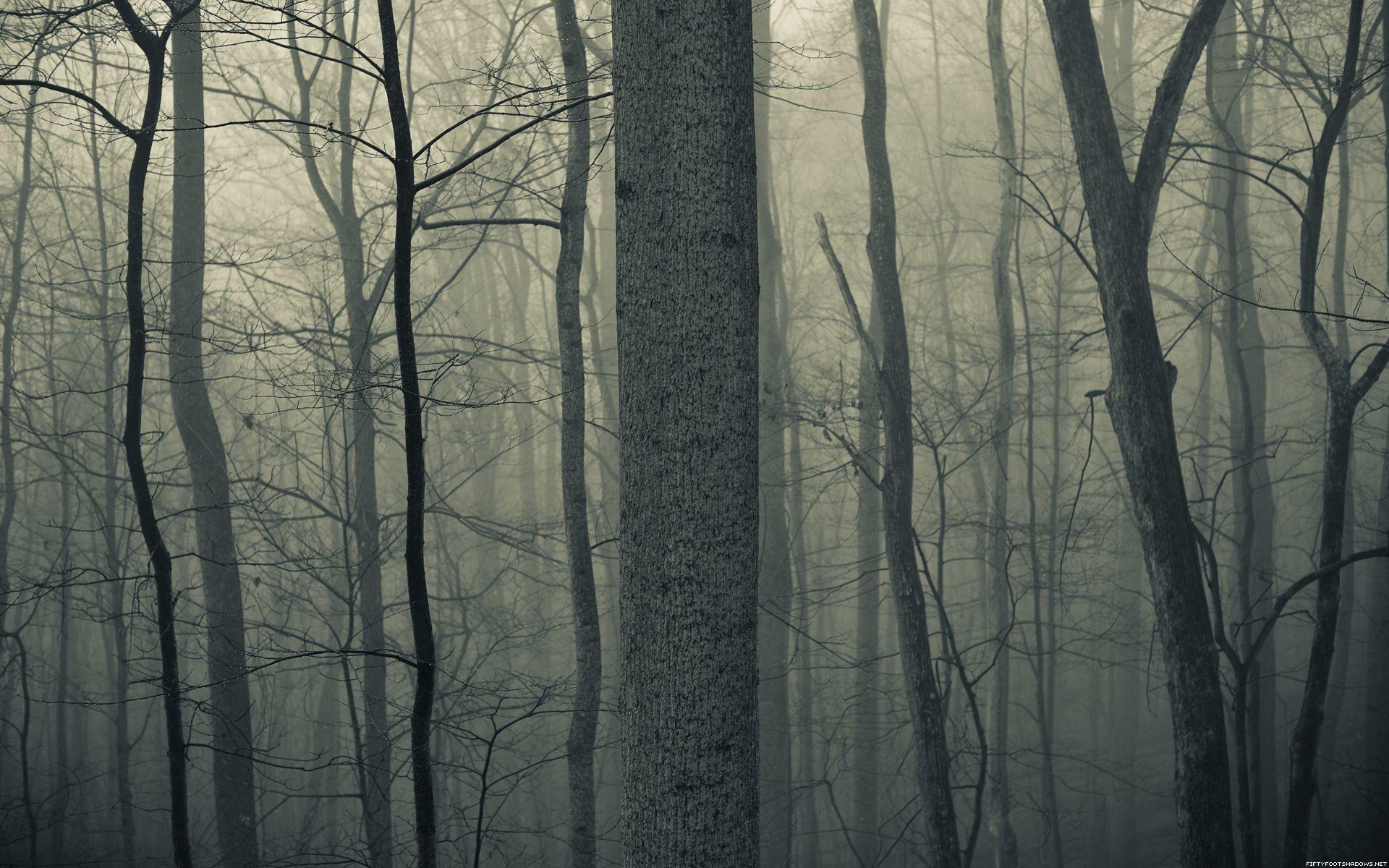 Nature trees forests woods trunk haze fog mist dark bark spooky … Desktop  wallpapers …