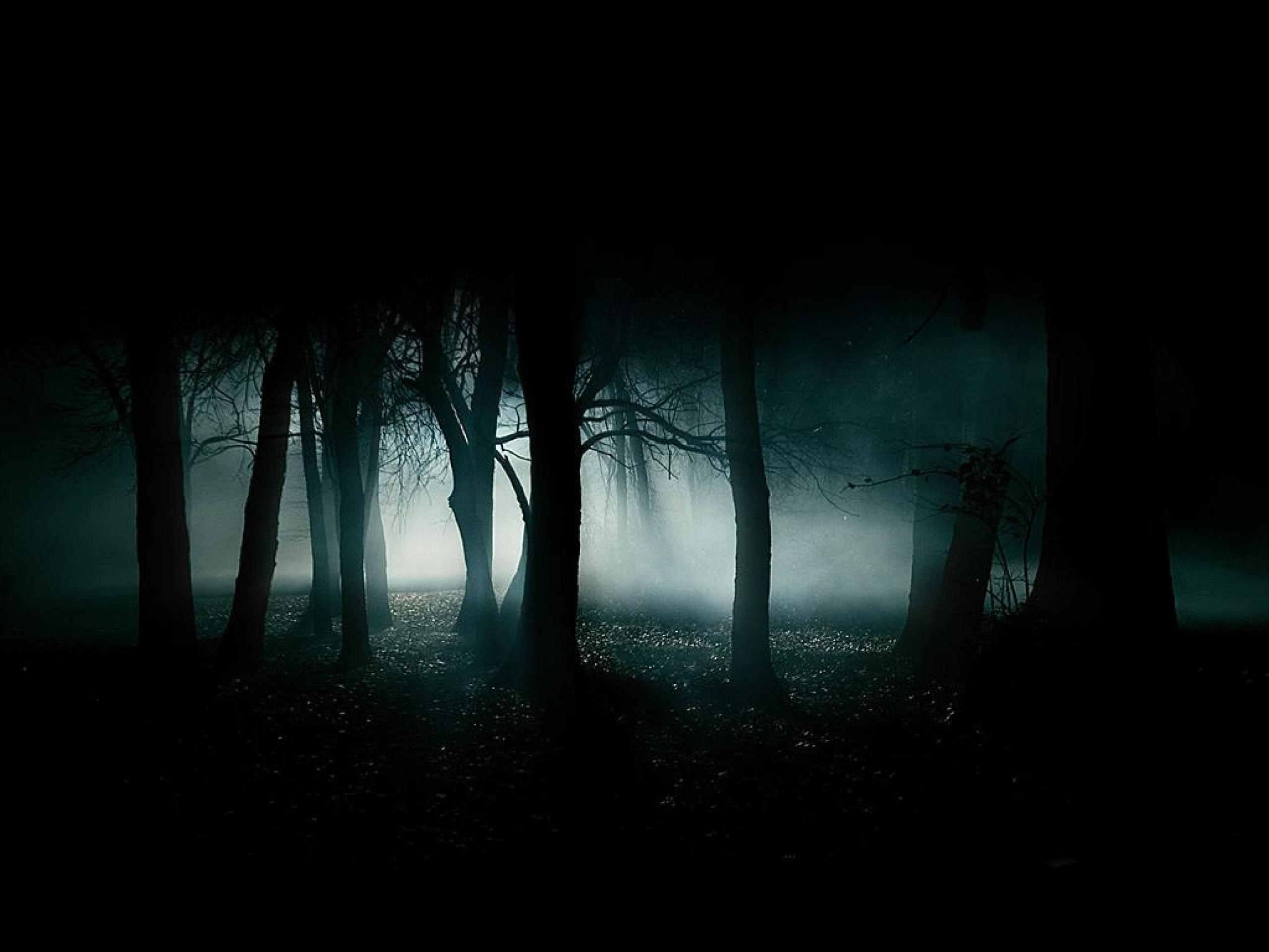 creepy blue black dark night white forest smoke woods gothic 1024×768  wallpaper