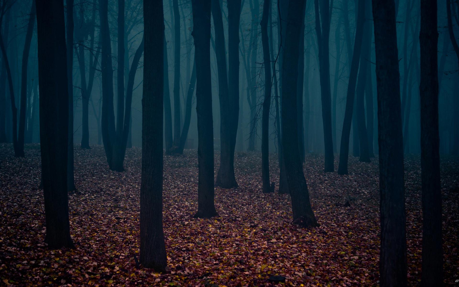 pin Dark clipart creepy forest #2