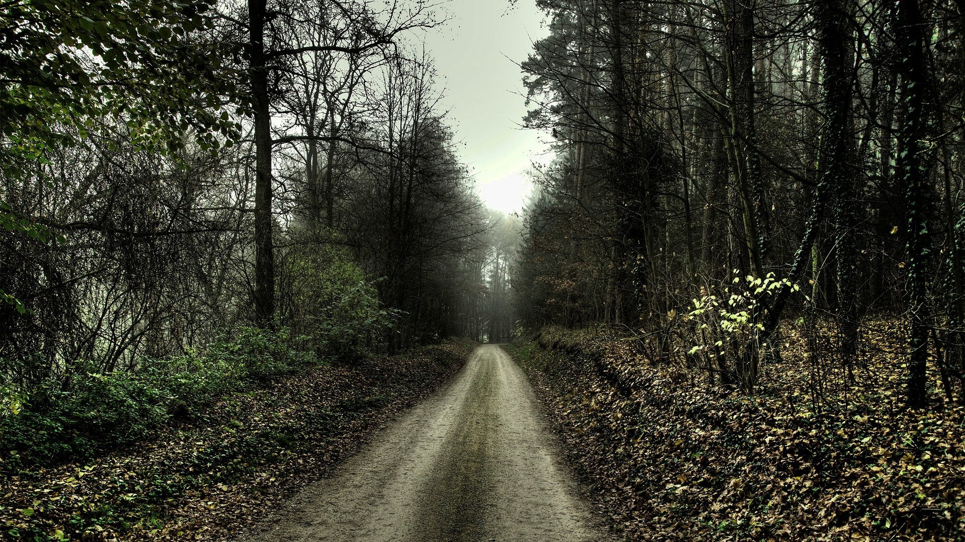 nature, Landscape, Path, Forest, Trees, Spooky Wallpapers HD . …
