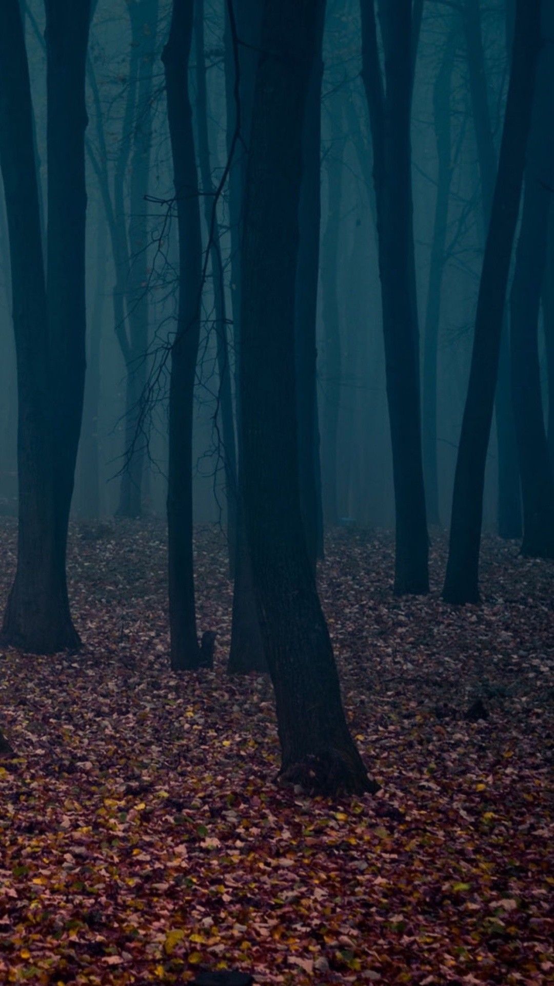 Spooky Autumn Forest Leafbed iPhone 6 Plus HD Wallpaper …