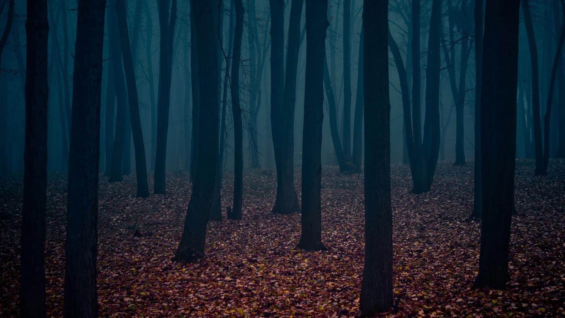 pin Dark clipart creepy forest #14