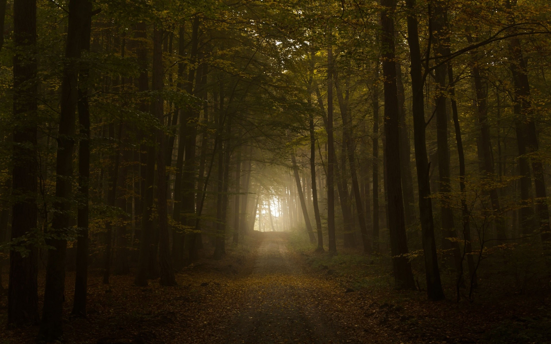 Creepy Forest Spooky Dream – HD Wallpapers Widescreen – 1920×1200
