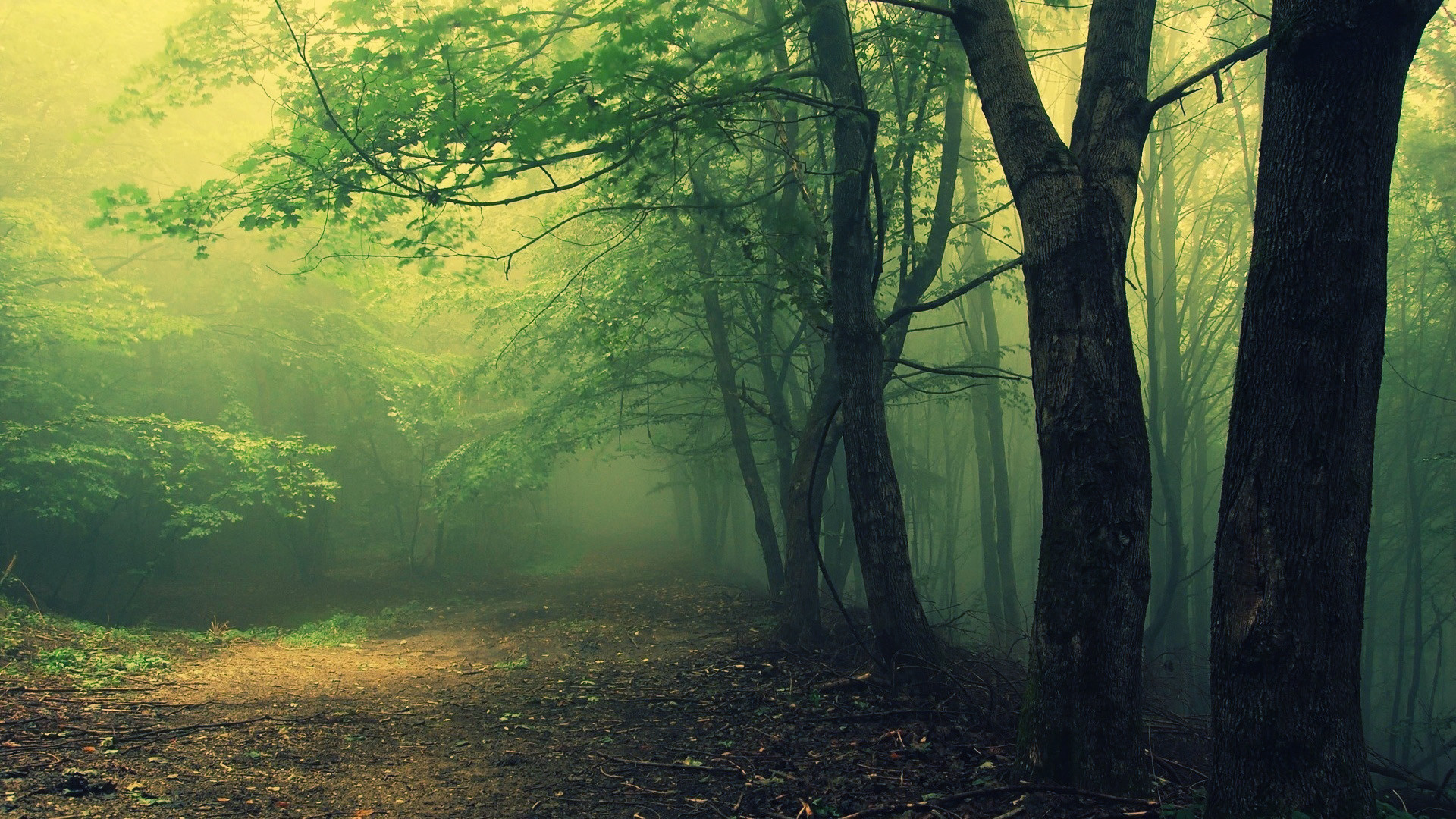 """Hoia Baciu Forest in Romania. Said to be a haunted forest, also called """""""