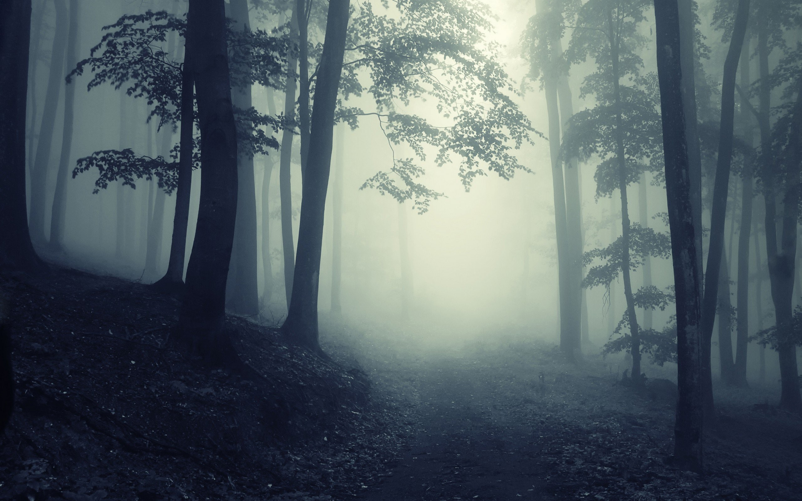 Dark Forest | Path Through A Dark Forest |