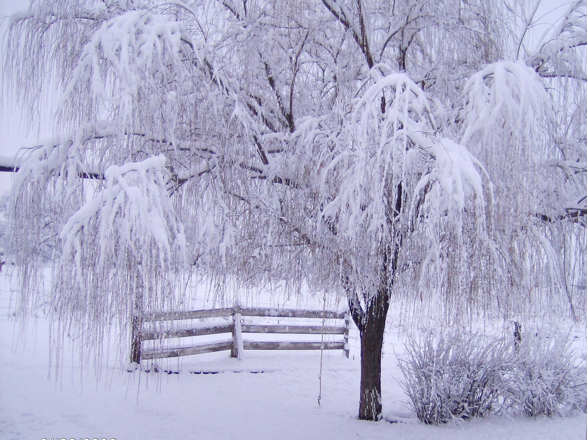 Free Winter Desktop Wallpaper Downloads, wallpaper, Free Winter .