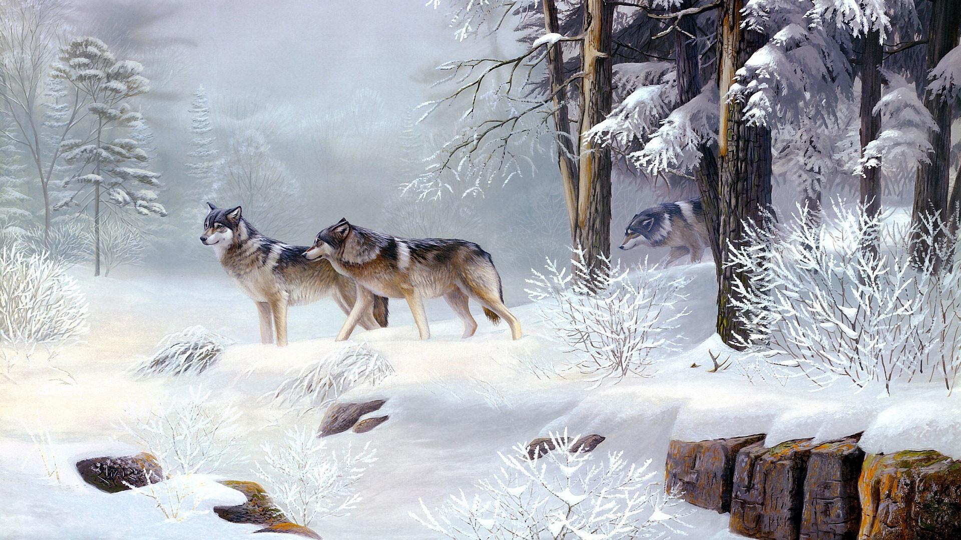 hd pics photos stunning wolfs 3d animated polar snow ice winter animals hd  quality desktop background