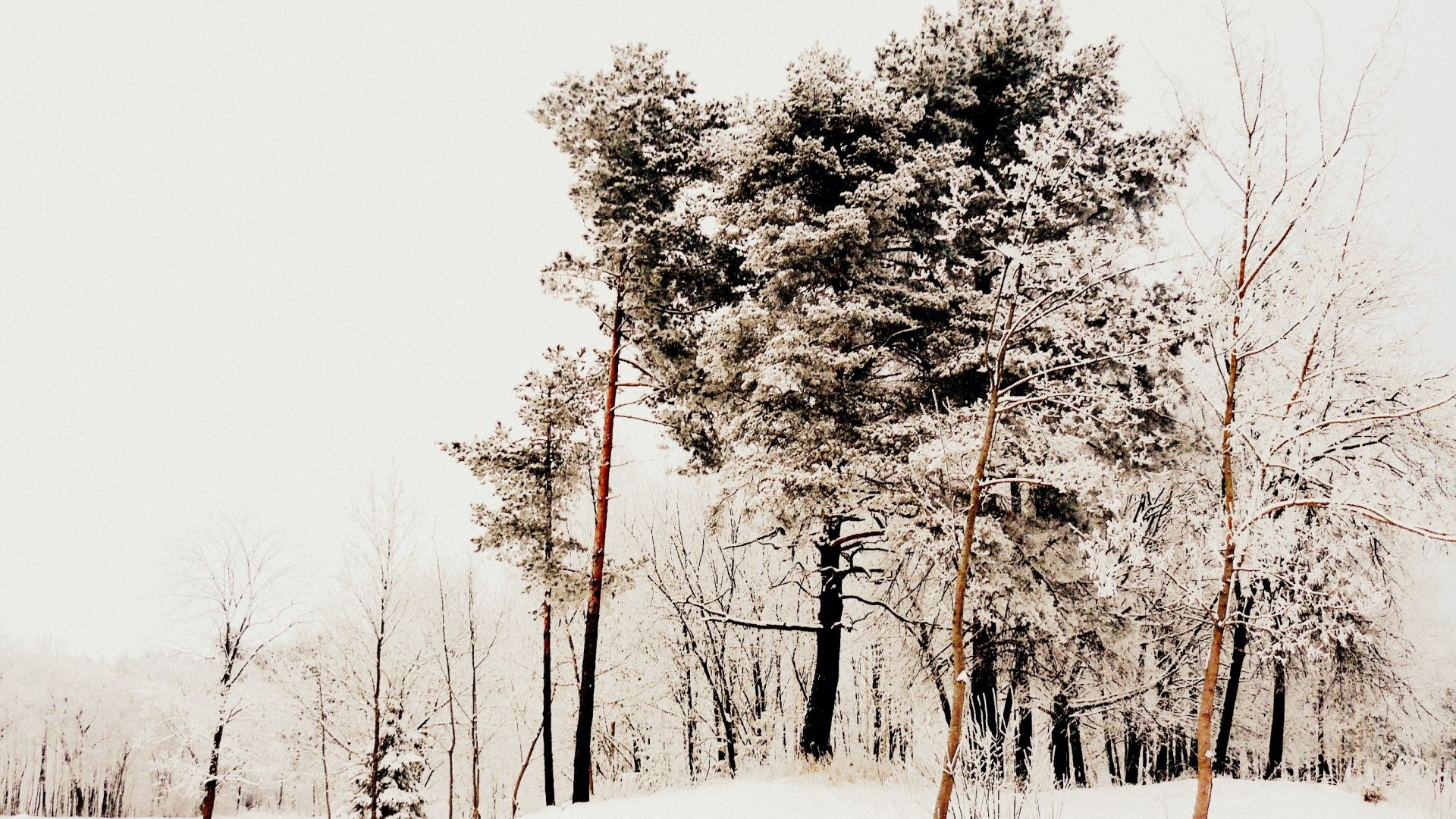 Winter – Nature Snow Photography Winter Beautiful White Desktop Pictures  Free for HD 16:9