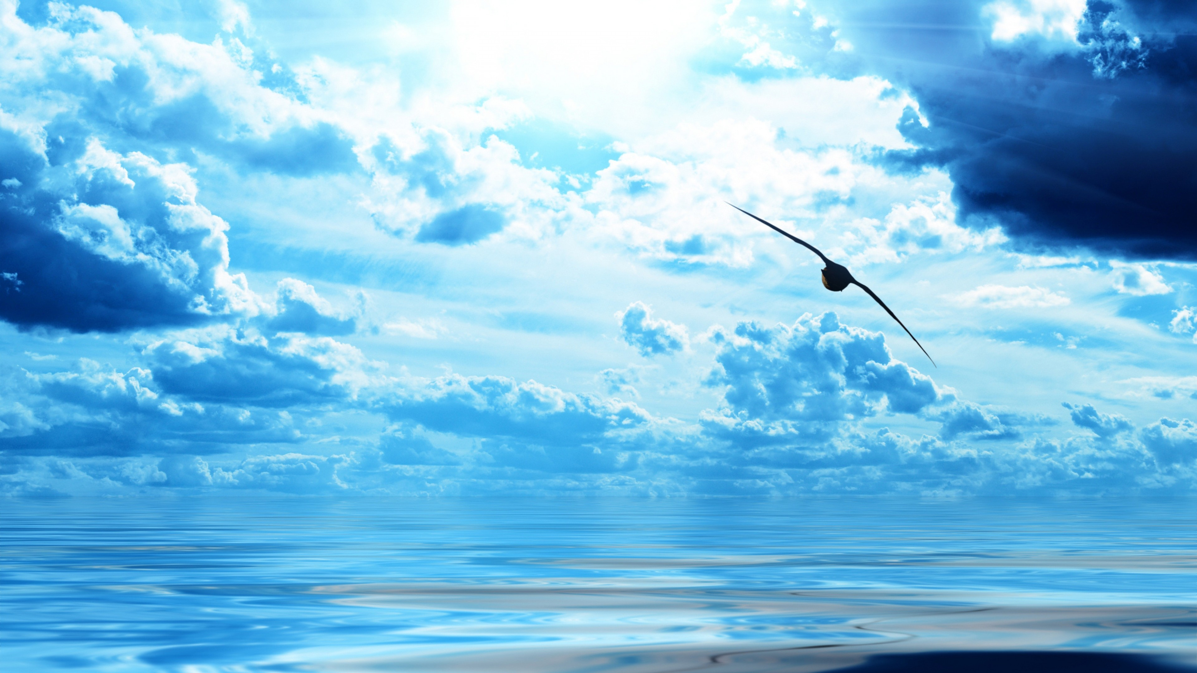 Wallpaper bird, ocean, flight, sky, clouds