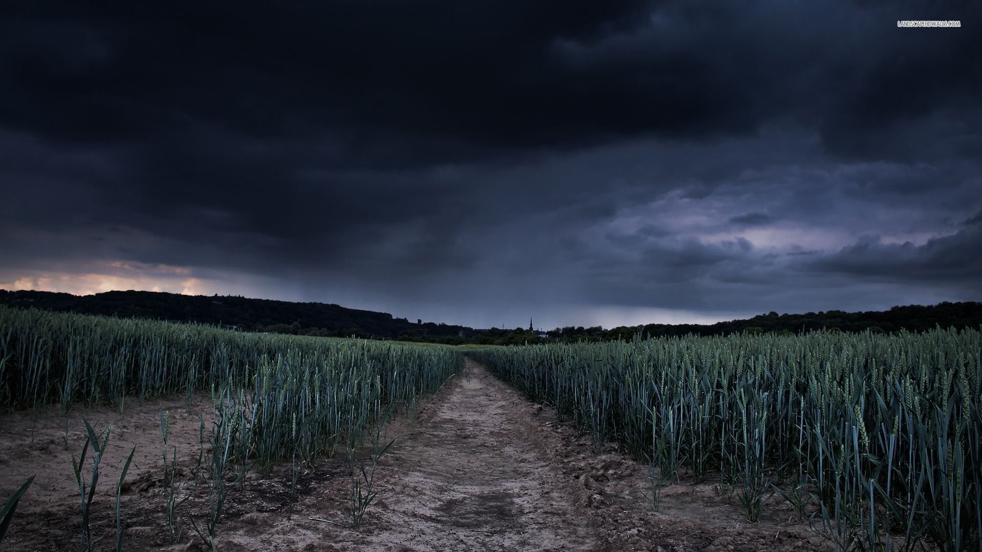 Wheat Field Under The Stormy Sky