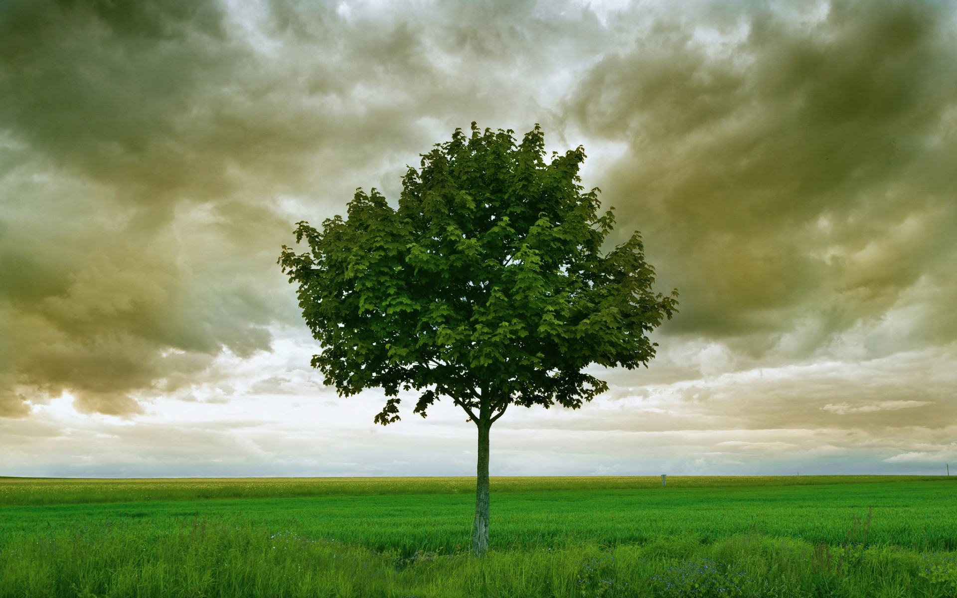 Tree Grass Field Stormy Sky wallpapers and stock photos