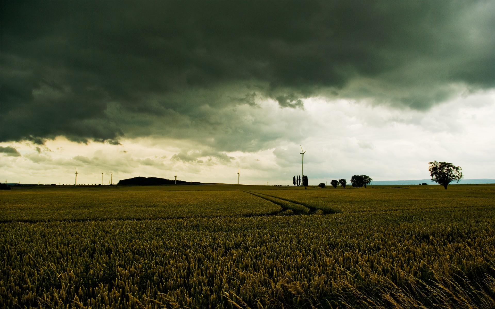 Gloomy Wheat Field Stormy Sky wallpapers and stock photos