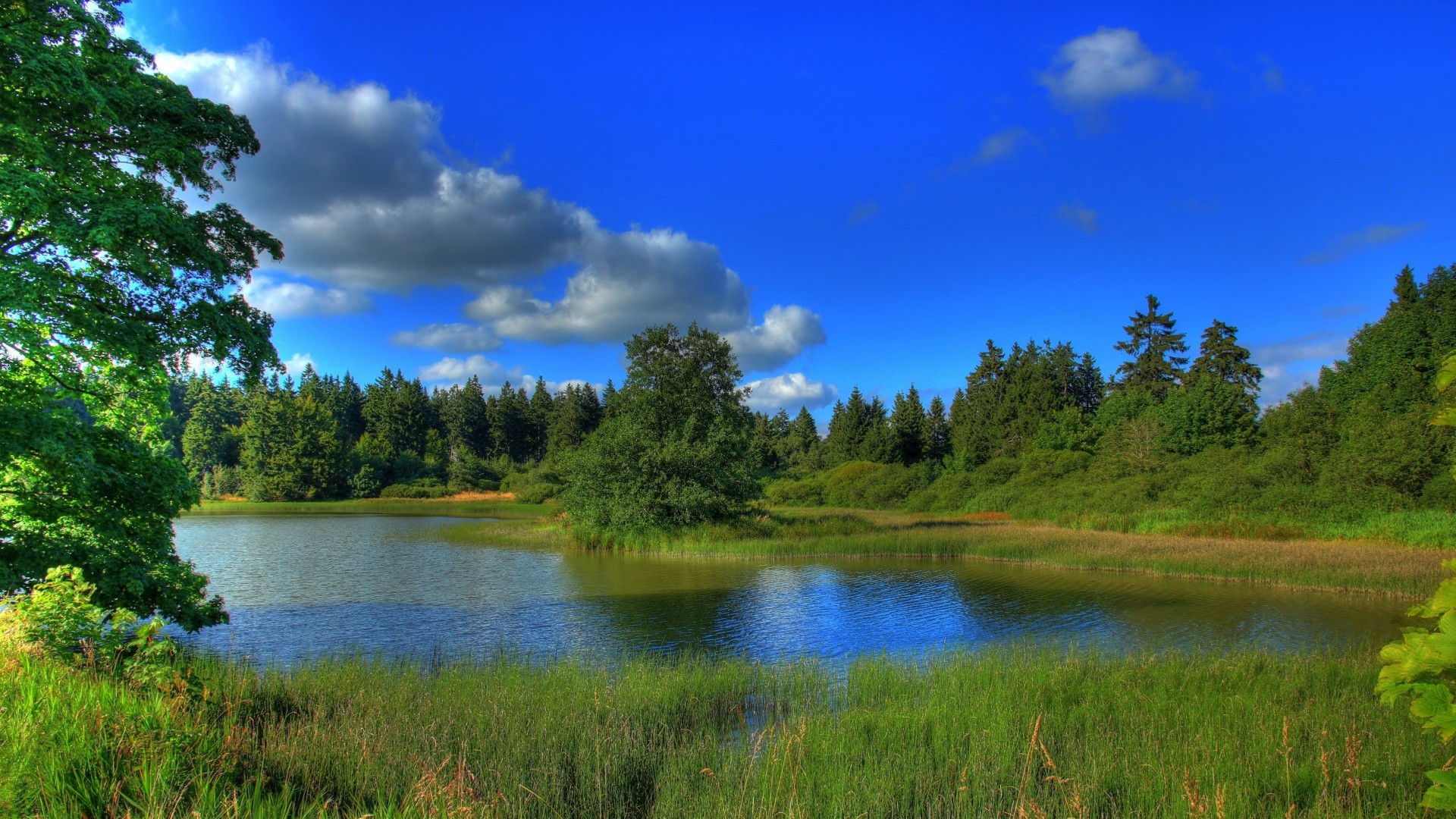 Preview wallpaper germany, landscape, lake, hessen, grass, nature 1920×1080
