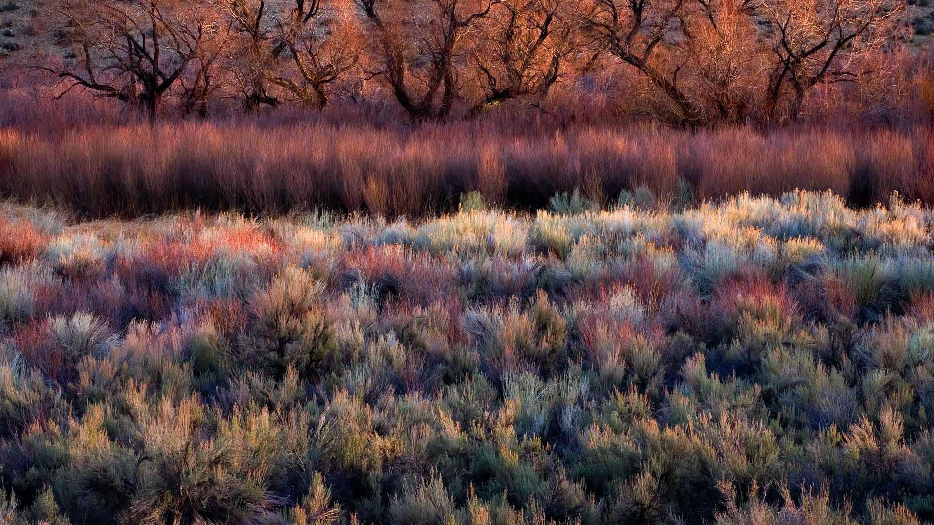 2014-01-10_EN-AU10309991569_Foliage-including-cottonwoods-willows-sage-