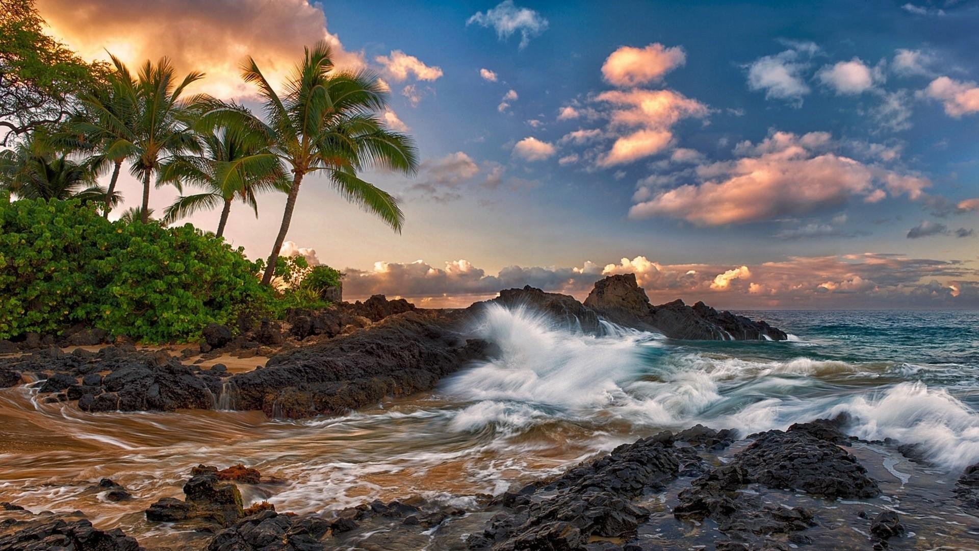 Preview wallpaper maui, hawaii, pacific ocean, rock, surf, rocks, palm