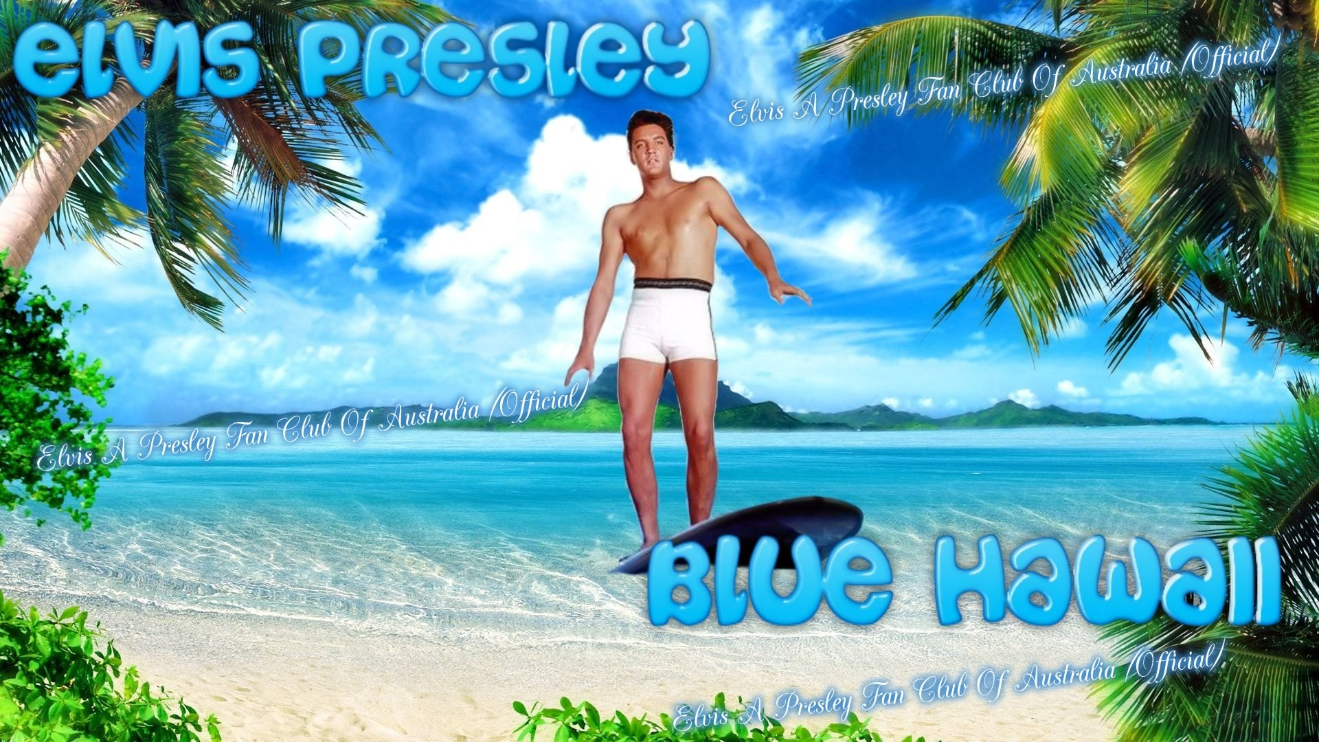 Elvis A Presley Fan Club Of Australia images blue Hawaii Wallpaper HD  wallpaper and background photos